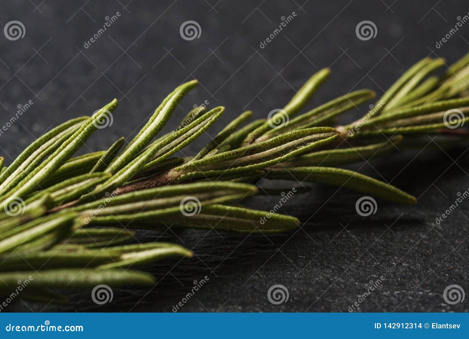Bladeren van rozemarijn op een donkere achtergrond voor het koken Rosemary de kruiden sluiten omhoog