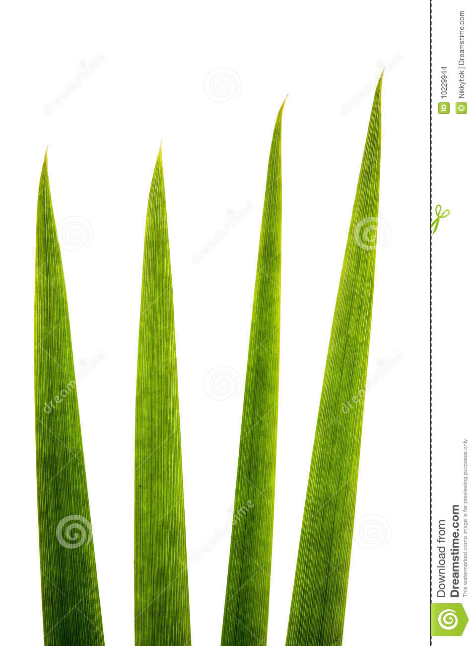Blades Of Grass Super Macro Stock Images Image 10229944