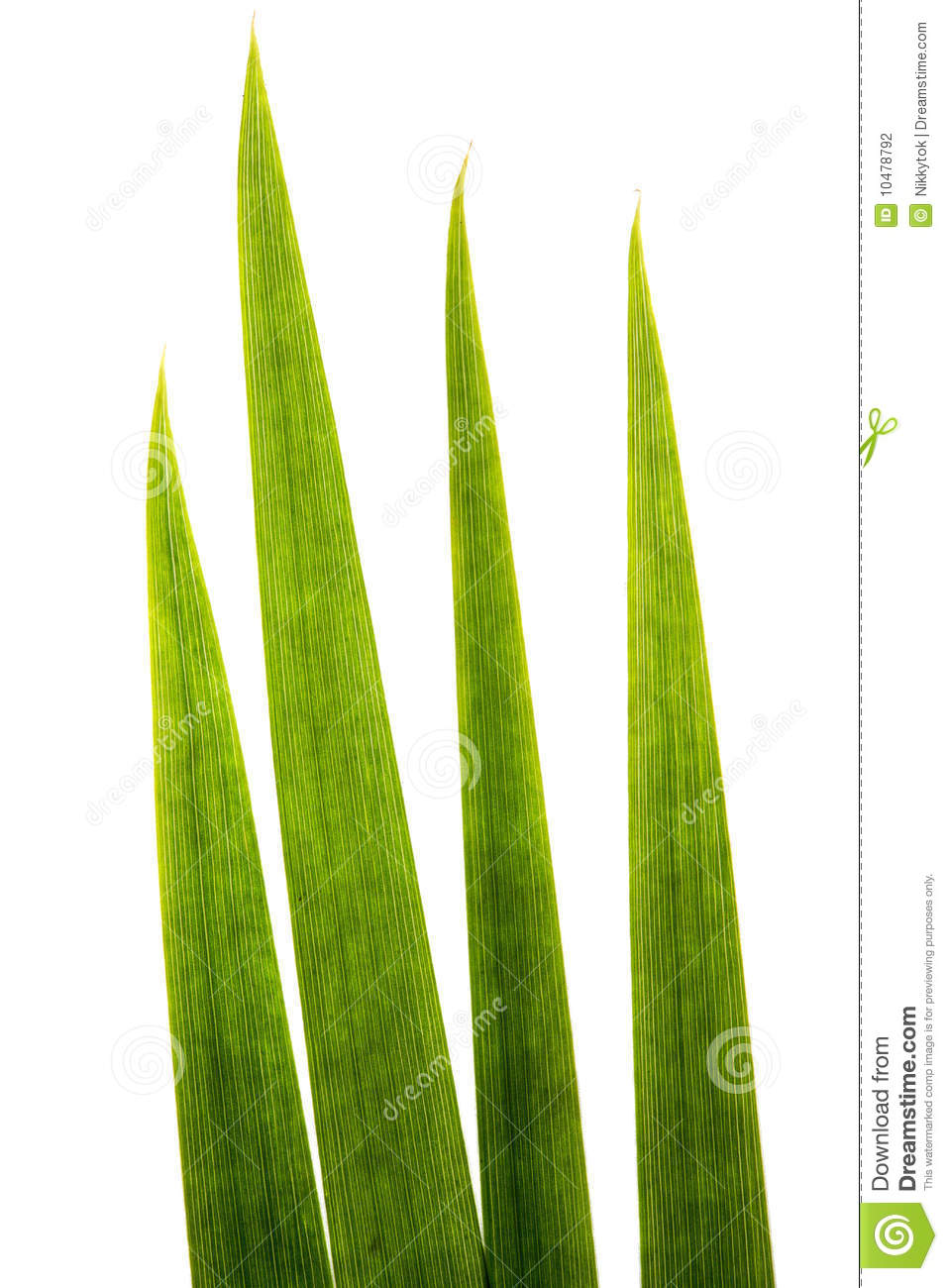Blades Of Grass Super Macro Stock Photo Image 10478792