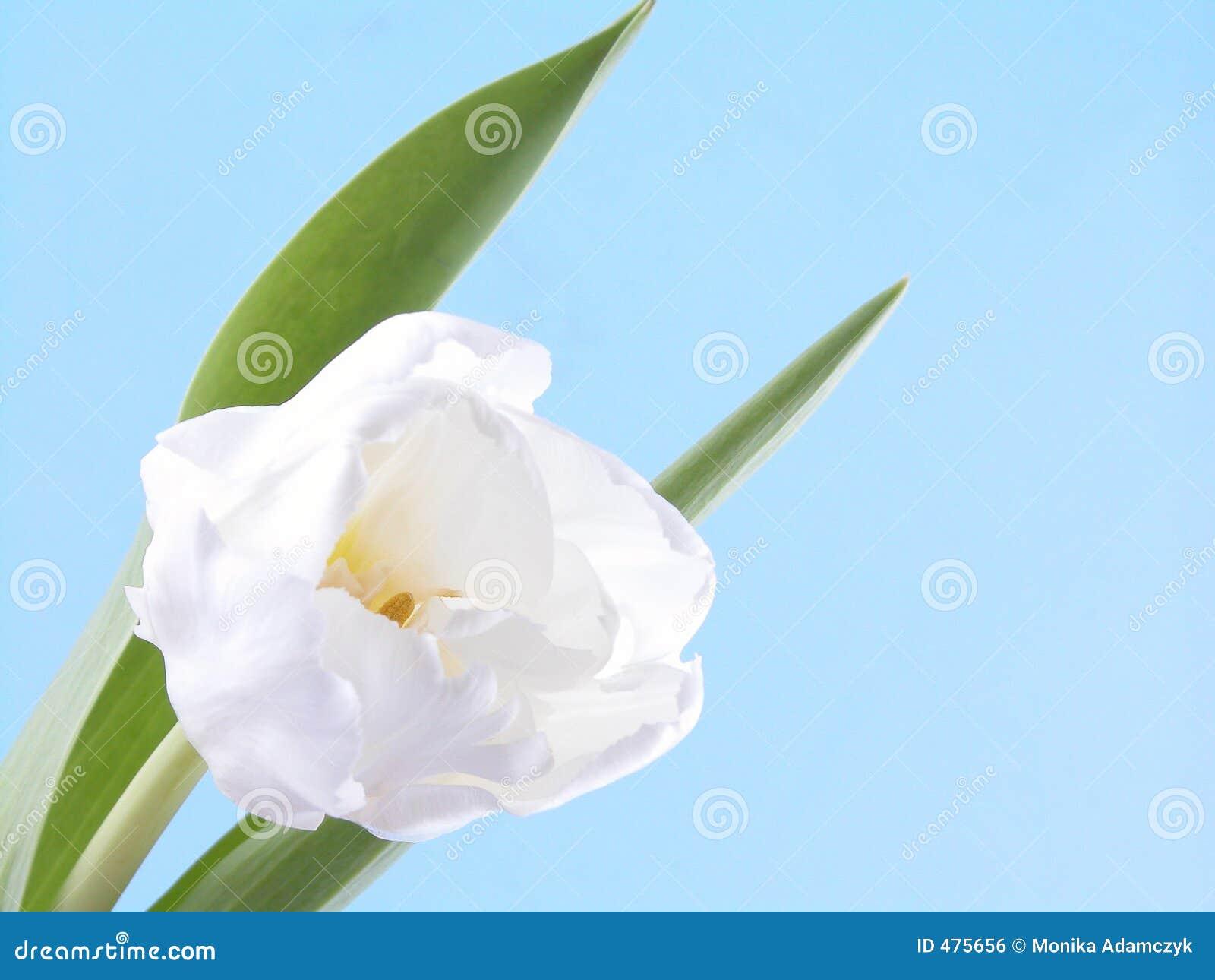 Blanc, beauté de source