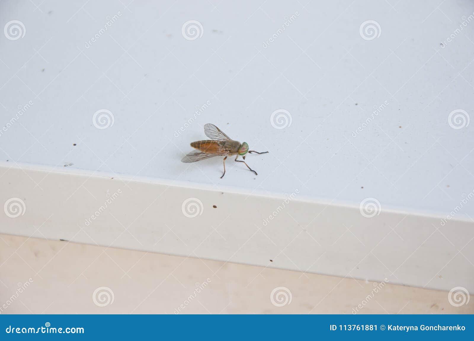 Plan de maison d insectes ventana blog - Maison a insectes plan ...