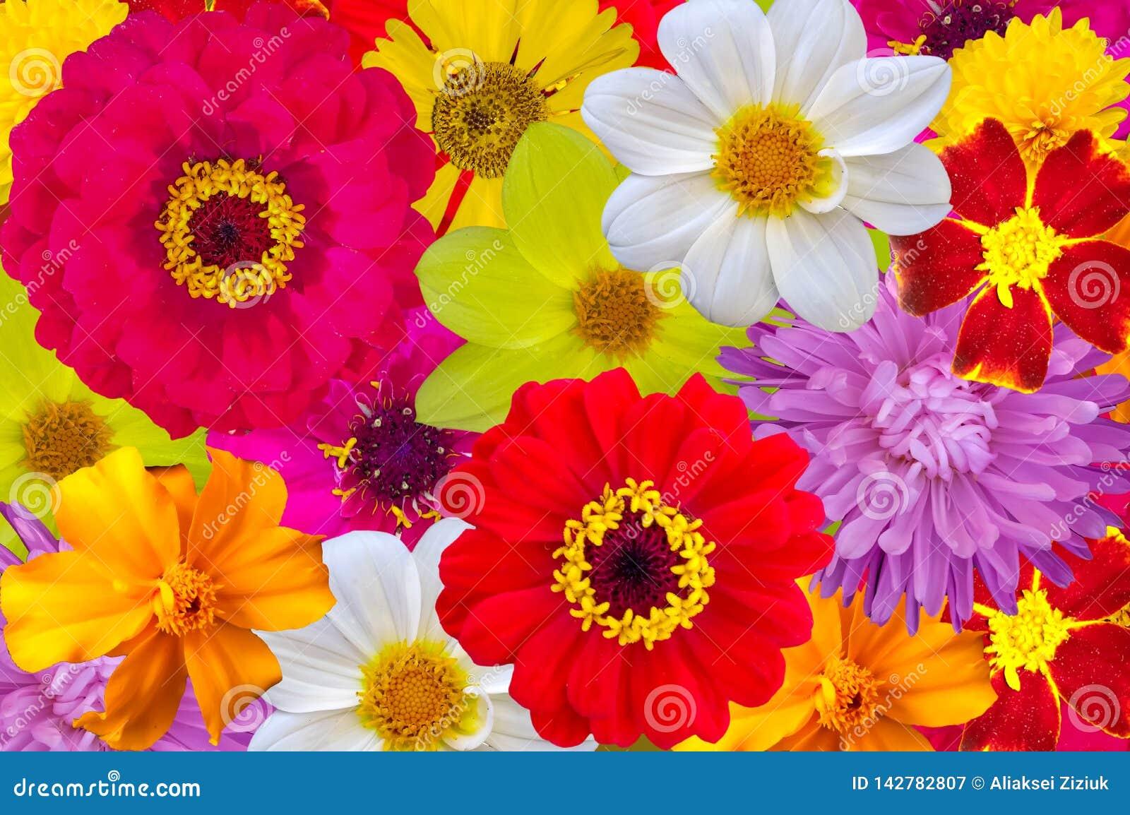 Blandning av ljusa stora blommor, bakgrund
