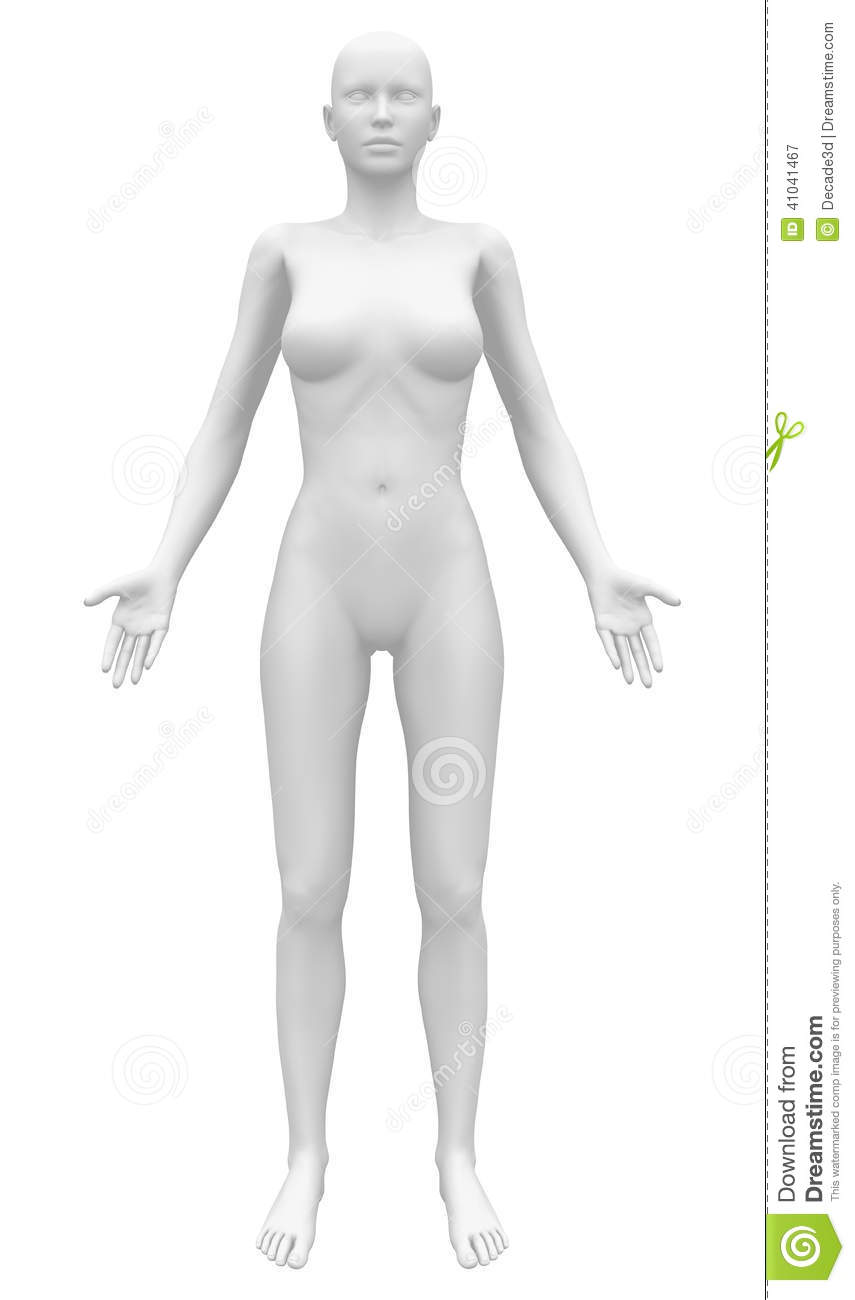 Blank Anatomy Female Figure Front View Stock Illustration