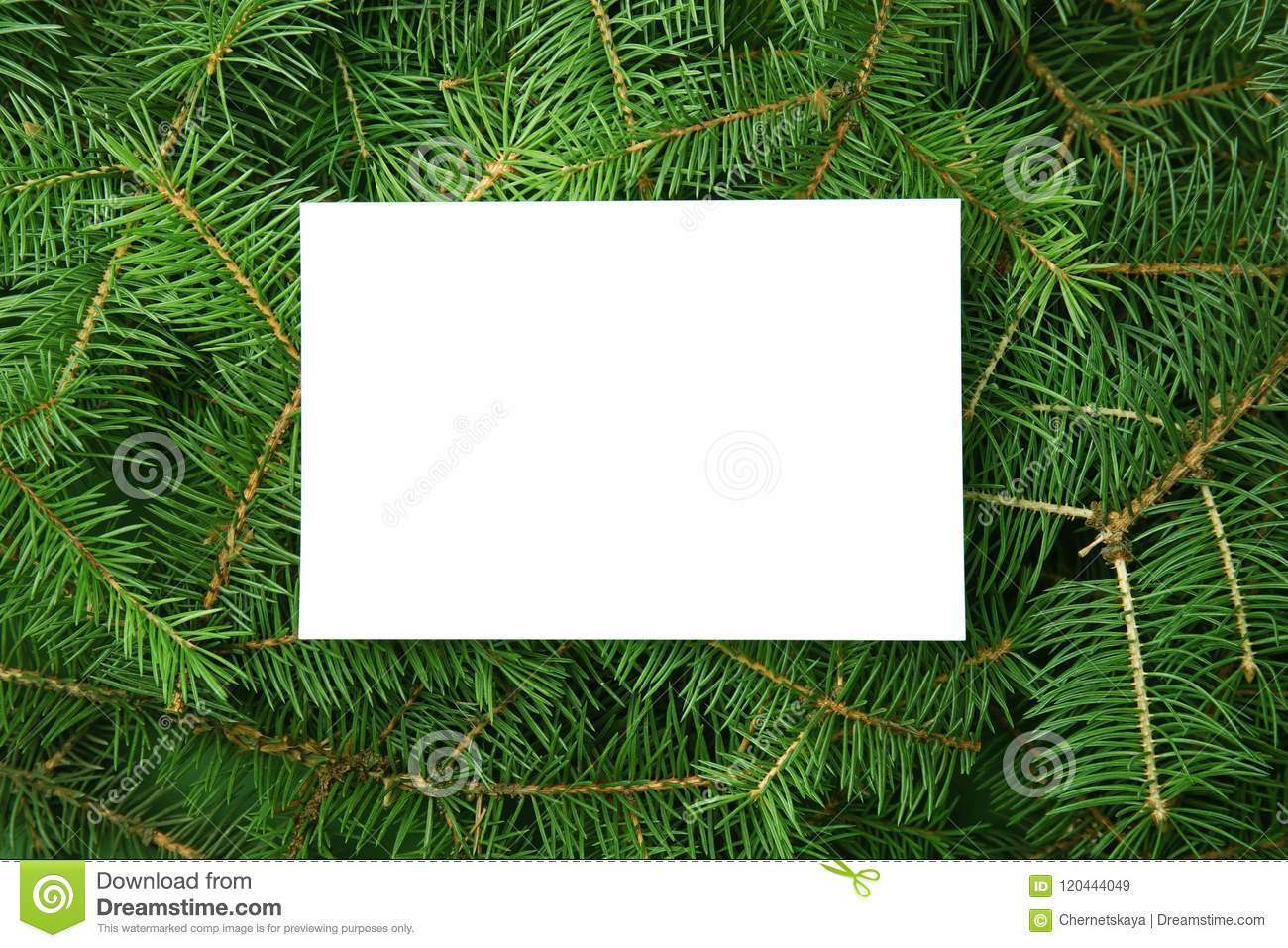 Christmas Tree Top View.Blank Card On Branches Of Christmas Tree Stock Image Image