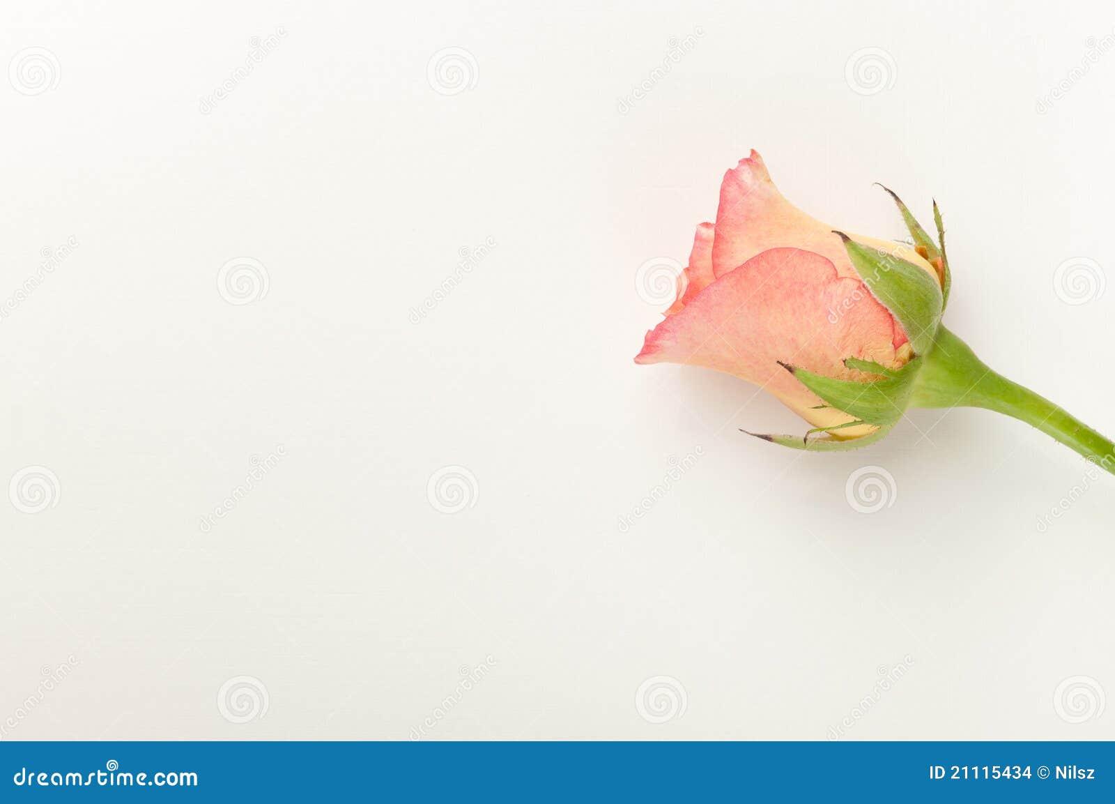 Blank Wedding Invitation Designs for beautiful invitation layout