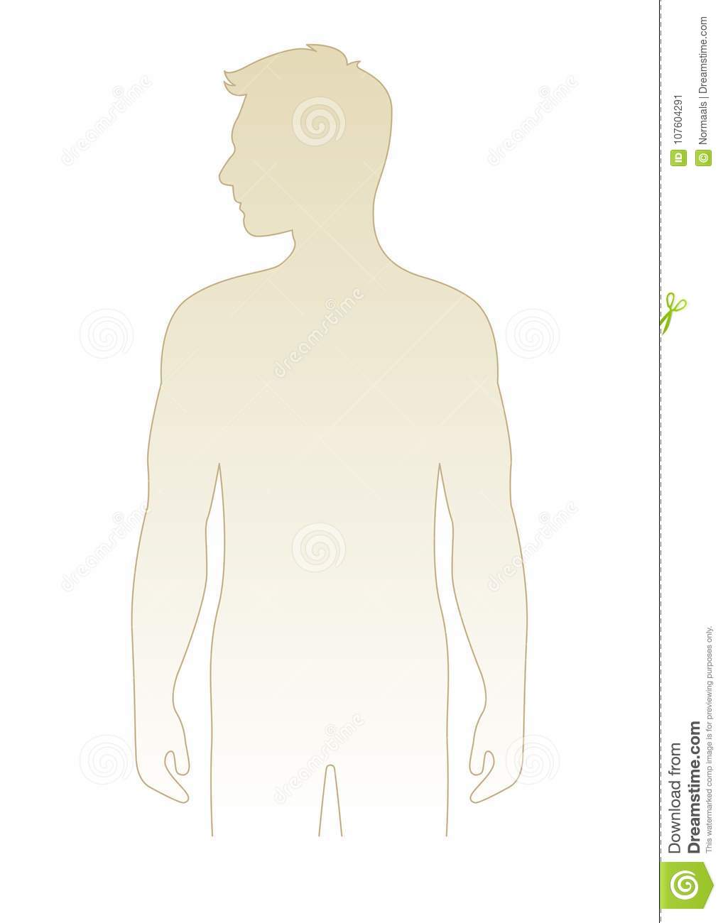 Blank Male Body Template Vector Illustration, Front View Torso ...