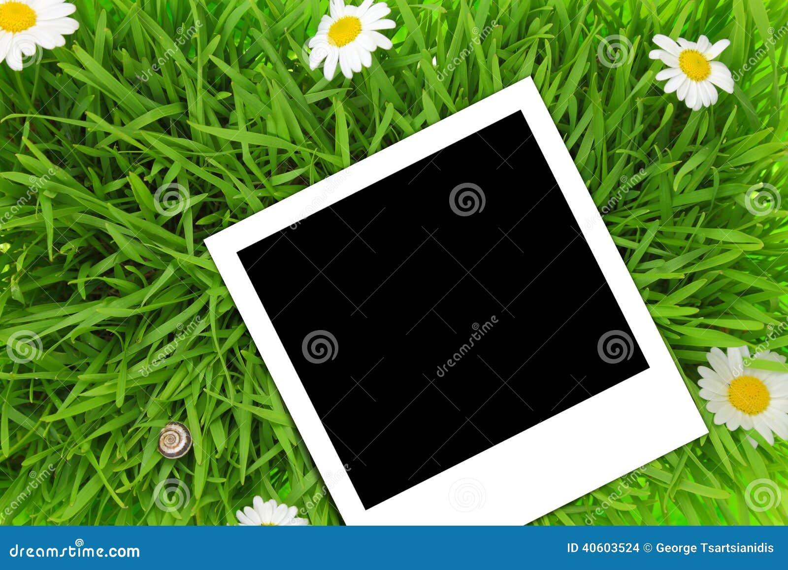 Photograph Template Stock photo: blank photograph template