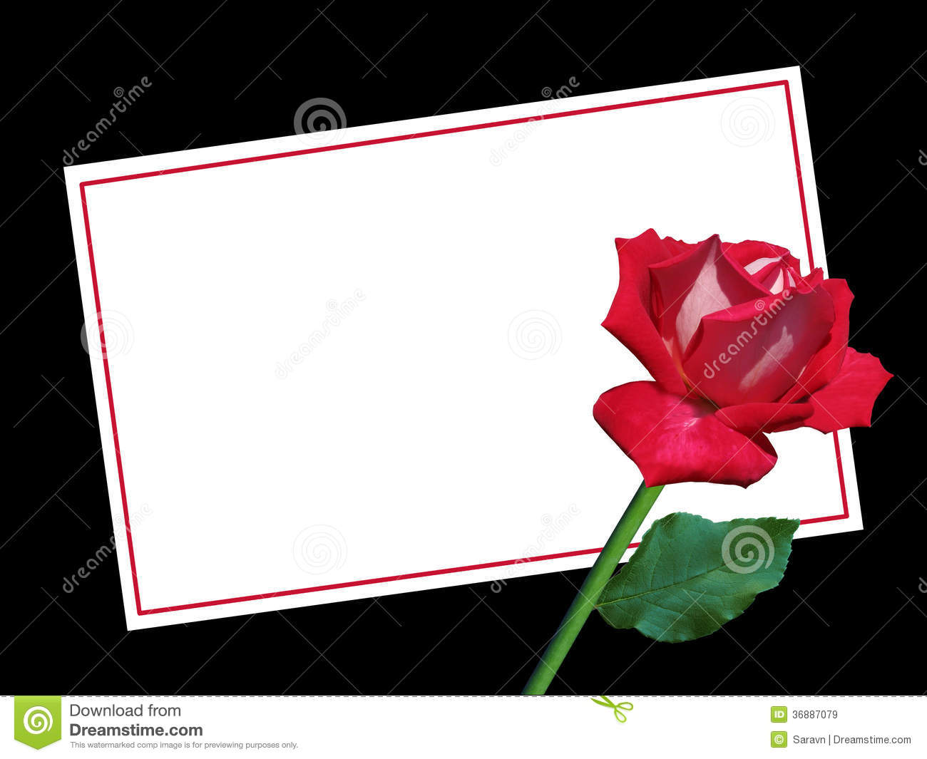 blank valentine's day card with red rose stock image - image: 36887079, Ideas