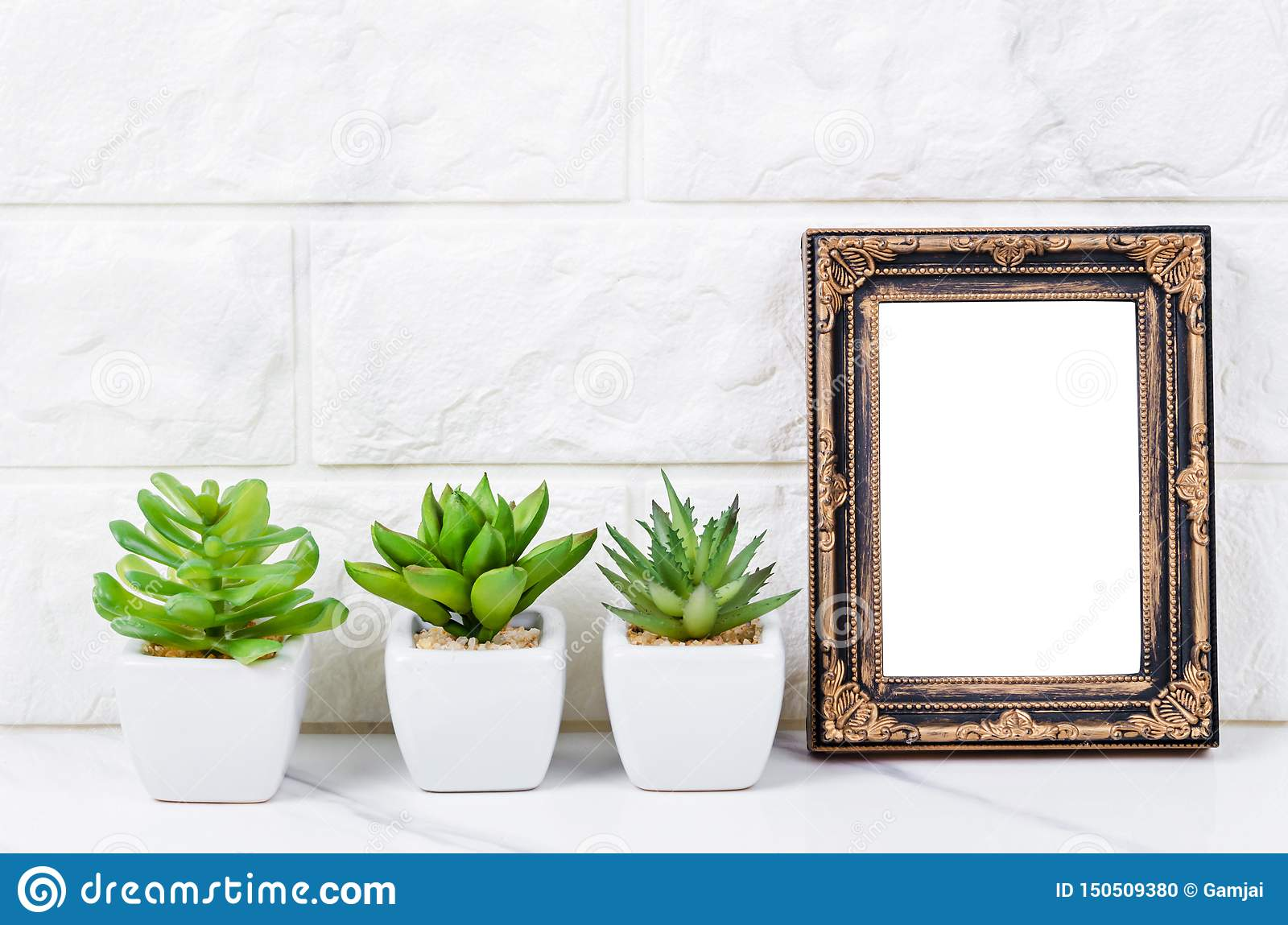 Blank vintage photo frame on wall with cactus plant