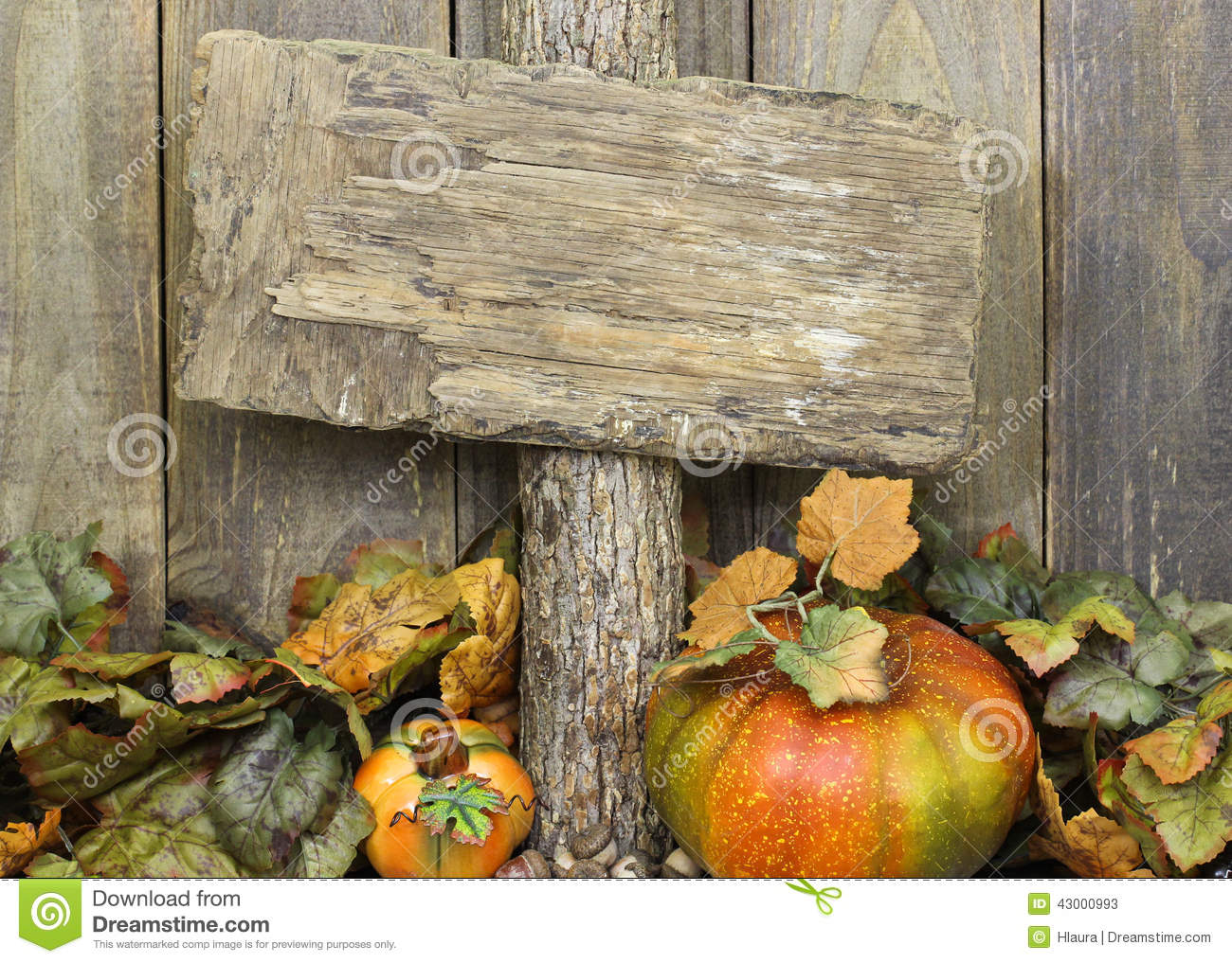 Blank Weathered Wood Sign With Autumn Border Of Leaves And