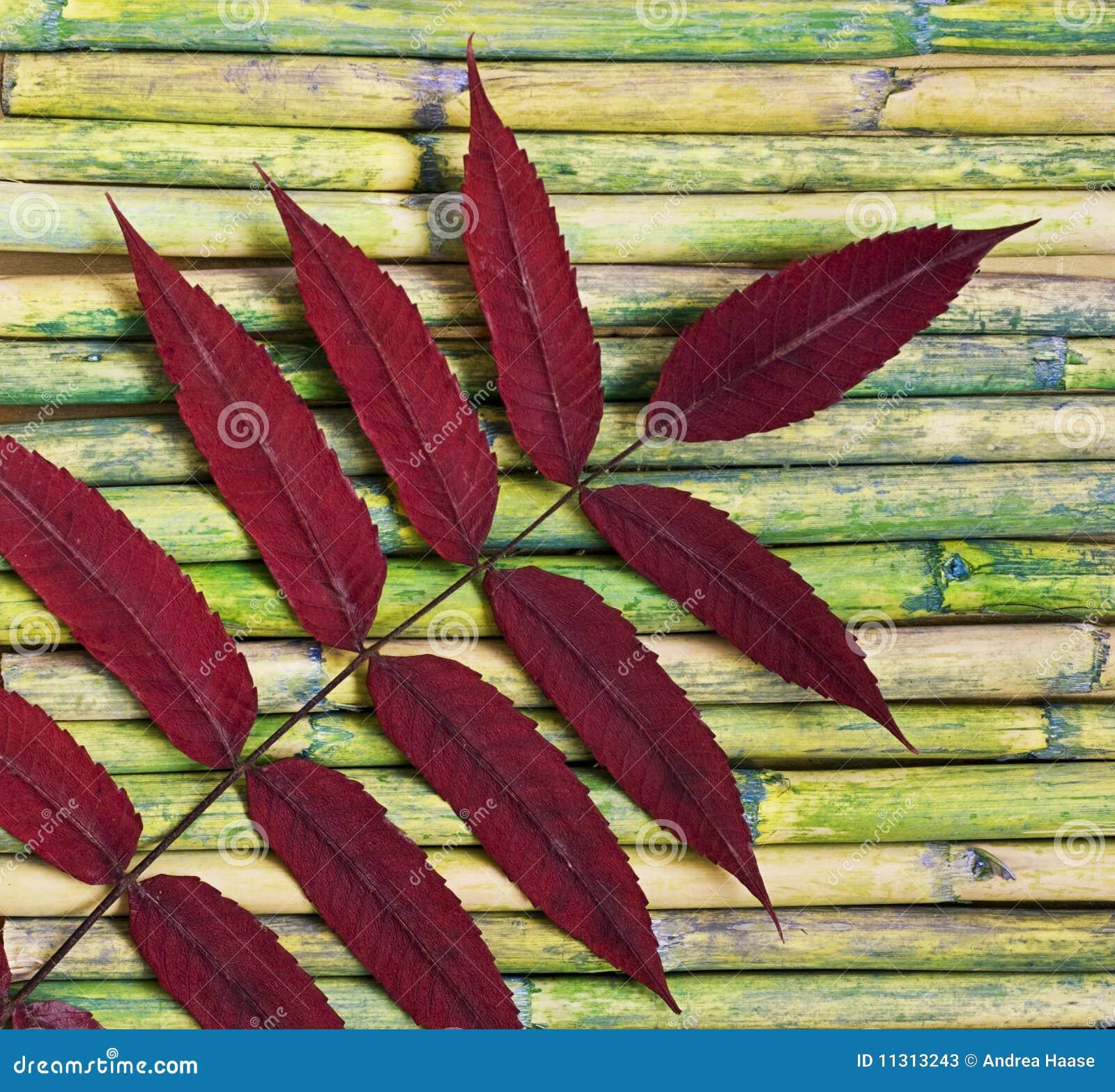 Blatt auf Bambus
