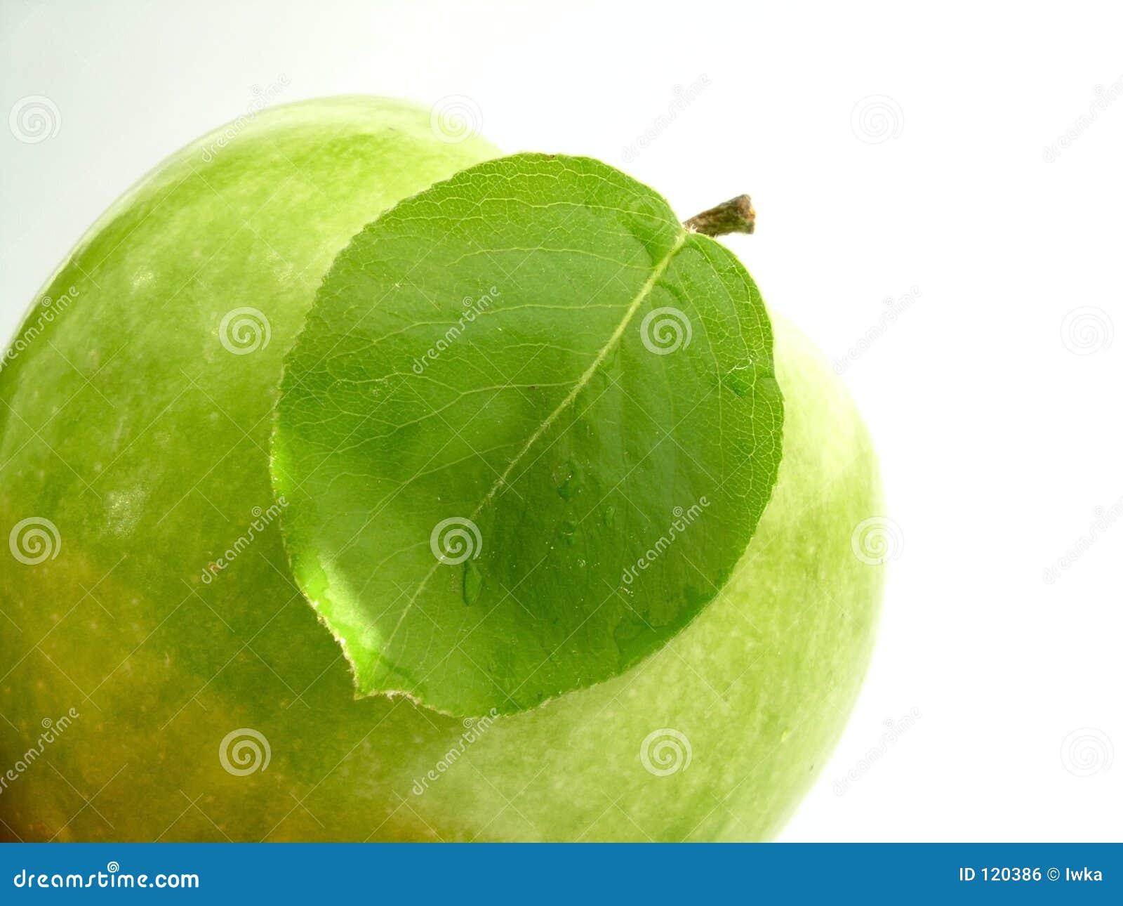 Blatt u. Apfel