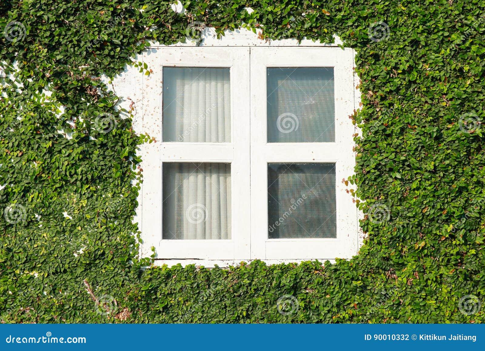 Blattfenster