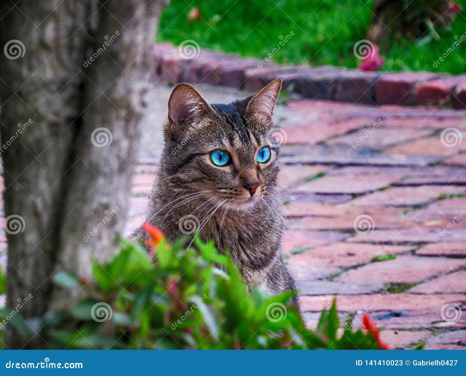Blauäugige Katze, die auf Ziegelsteinboden im Garten sitzt