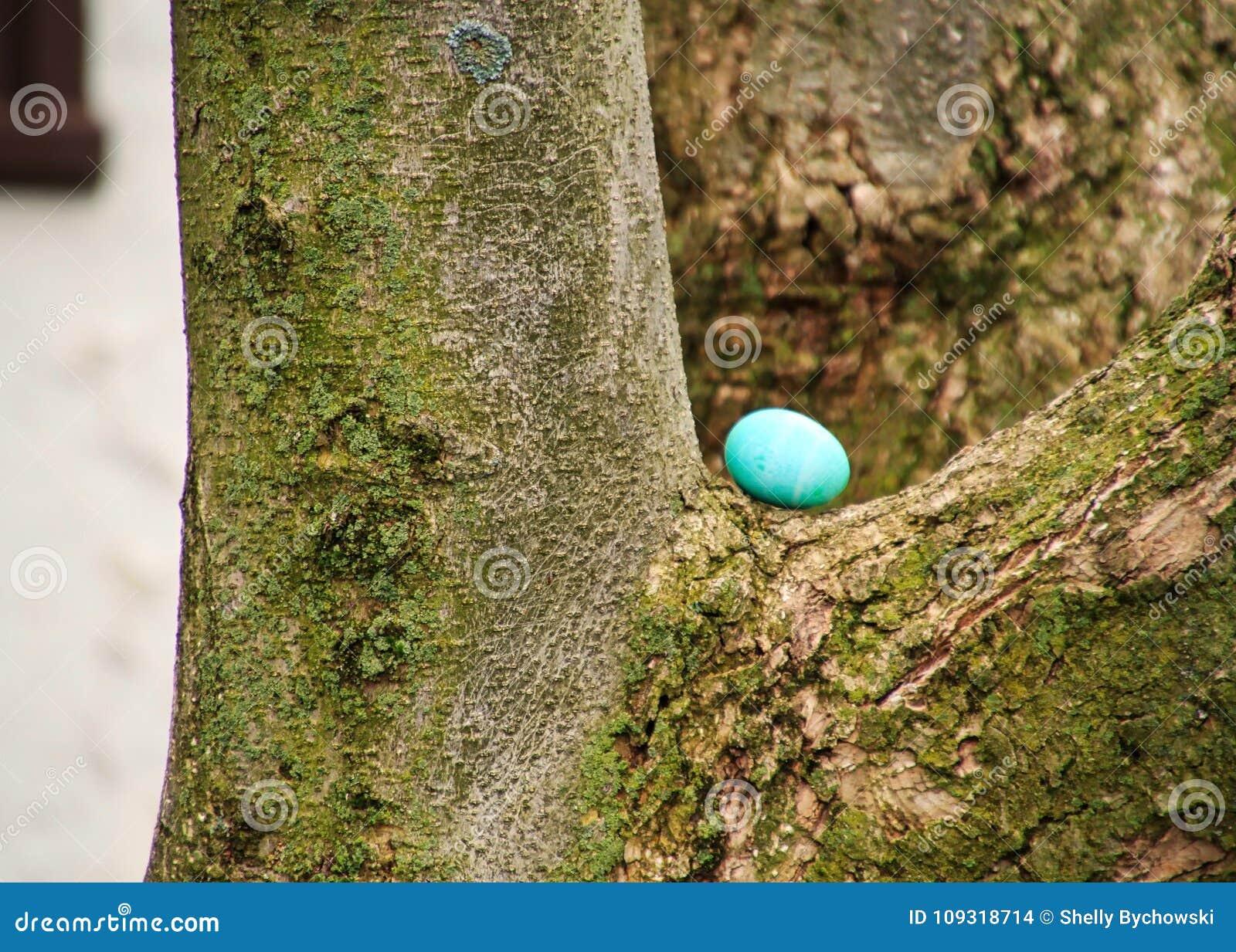 Blau-gefärbtes Osterei wird auf einem Baumhaken versteckt