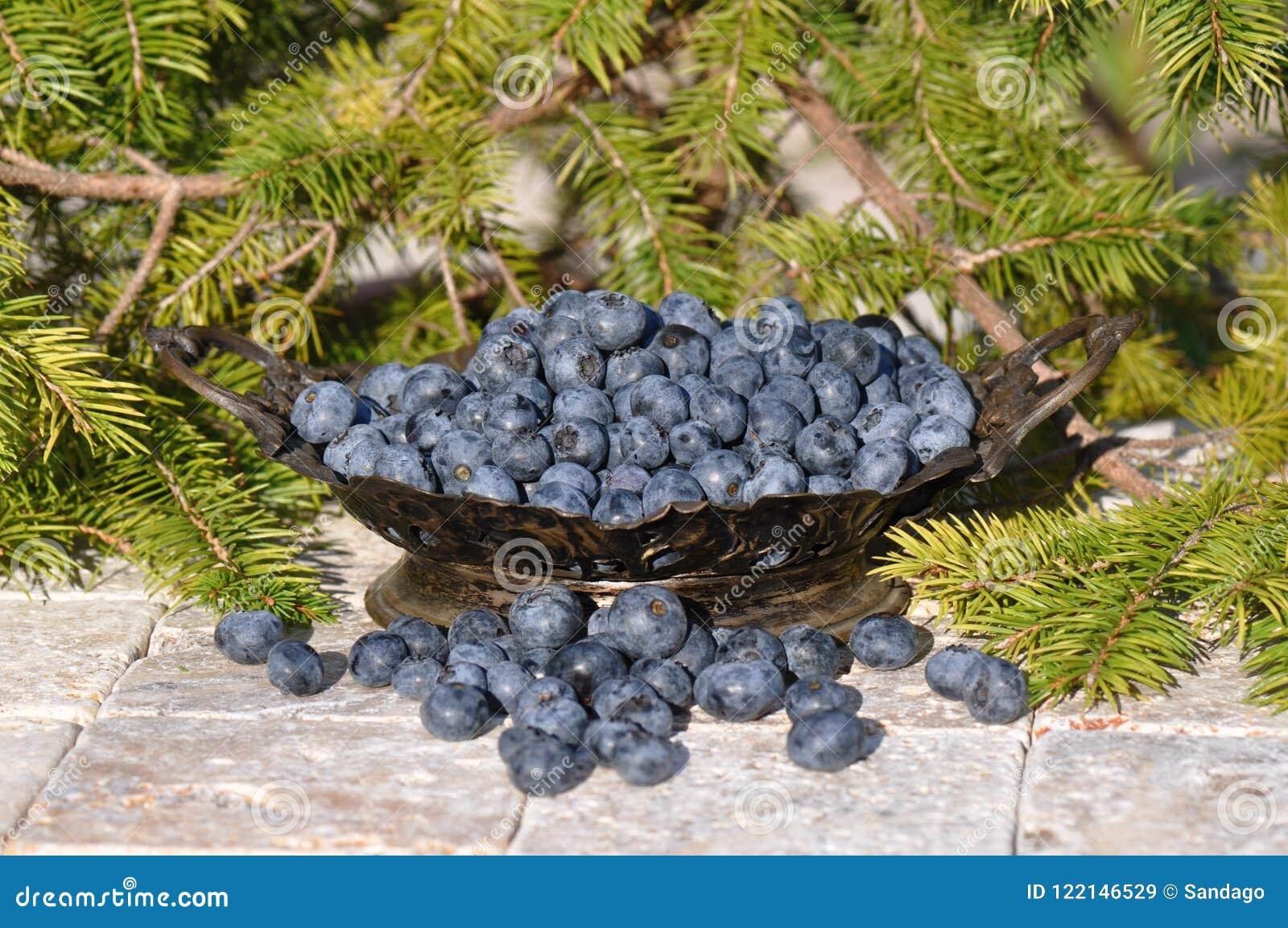 Blaubeeren Geschmackvoll, Nachtisch