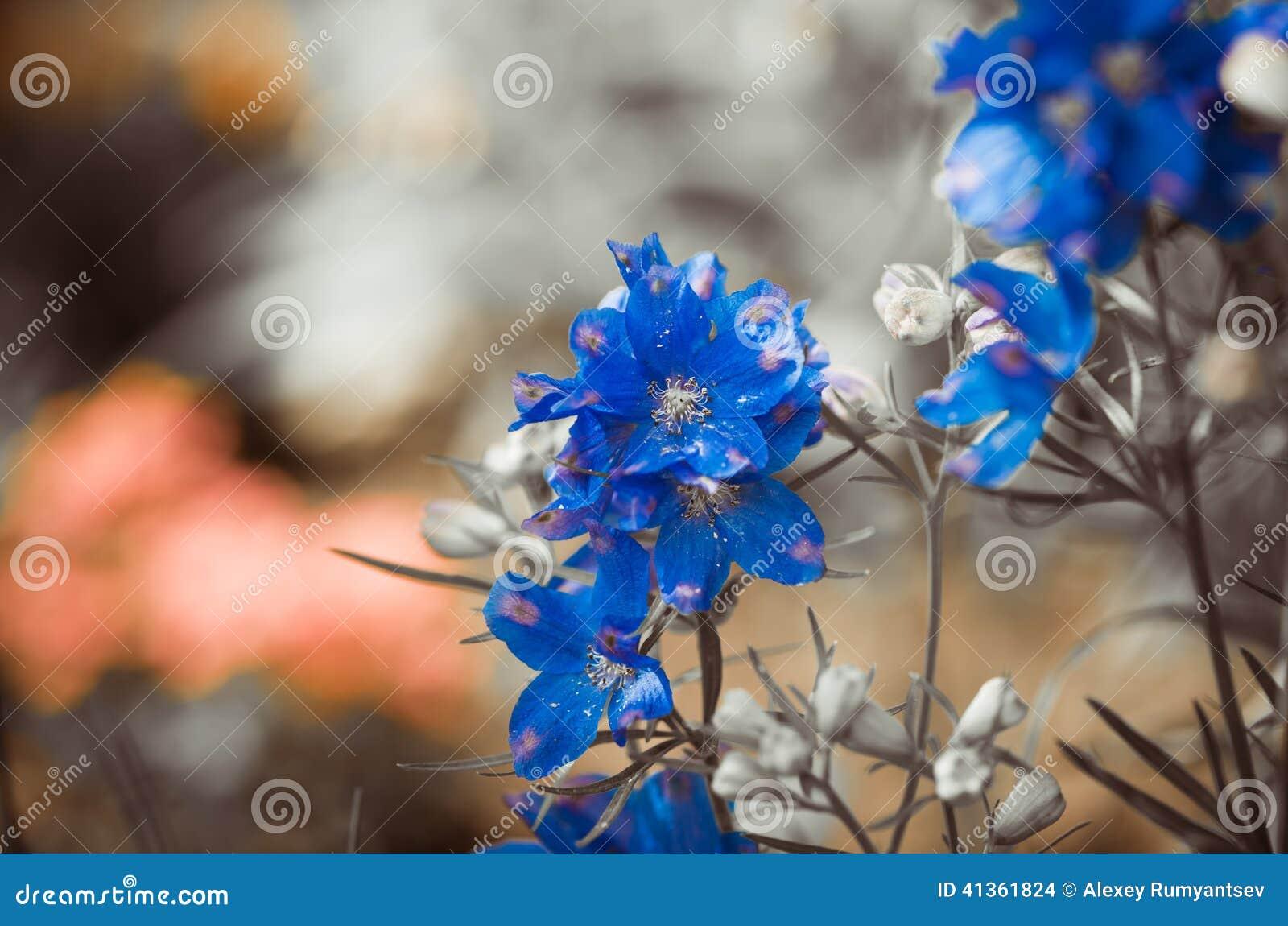 Garten Blumen Blau