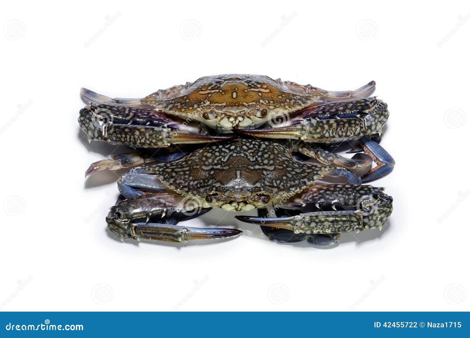Blaue Krabbe auf Weiß