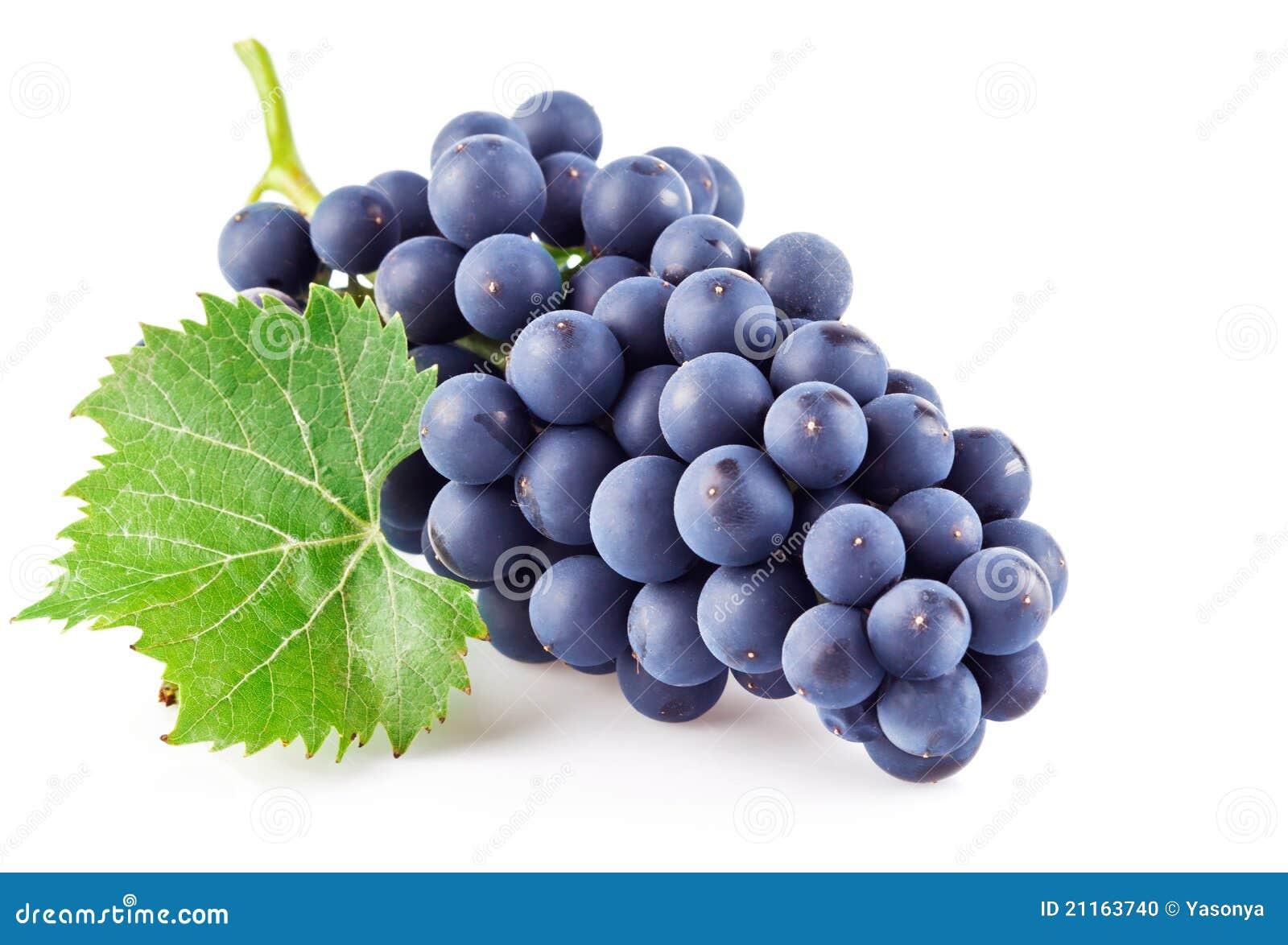 Bilder Blaue Weintrauben ~ Blaue Trauben Mit Grünem Blatt Stockfoto  Bild 21163740