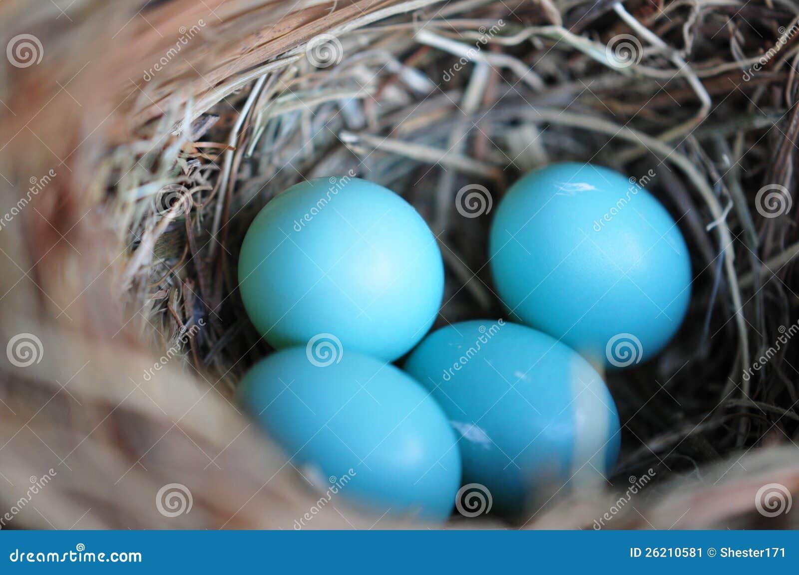 Kleine Blaue Vogeleier
