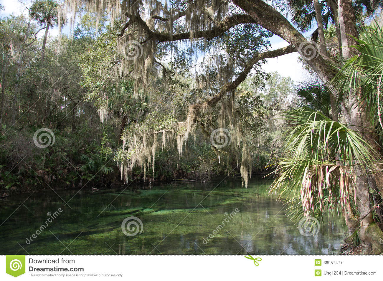 Blauer Frühlings-Nationalpark, Florida, USA