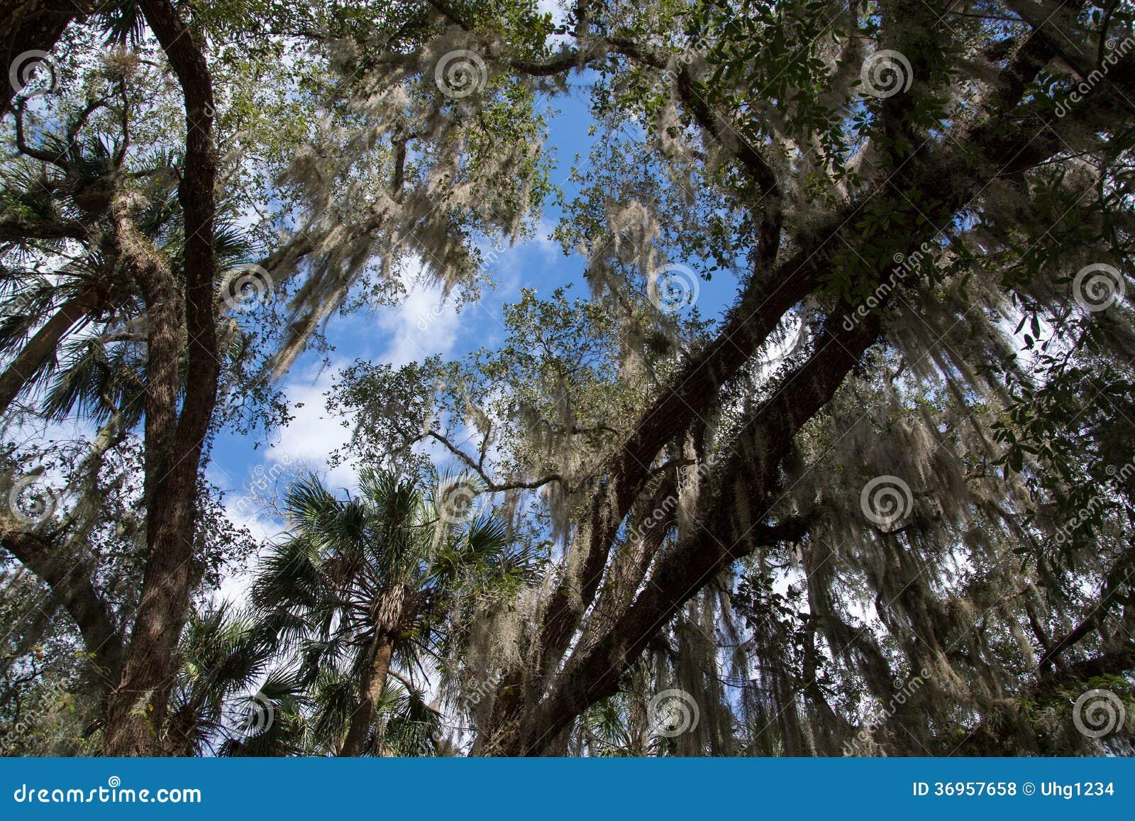 Blauer Frühlings-Nationalpark, Florida, USA