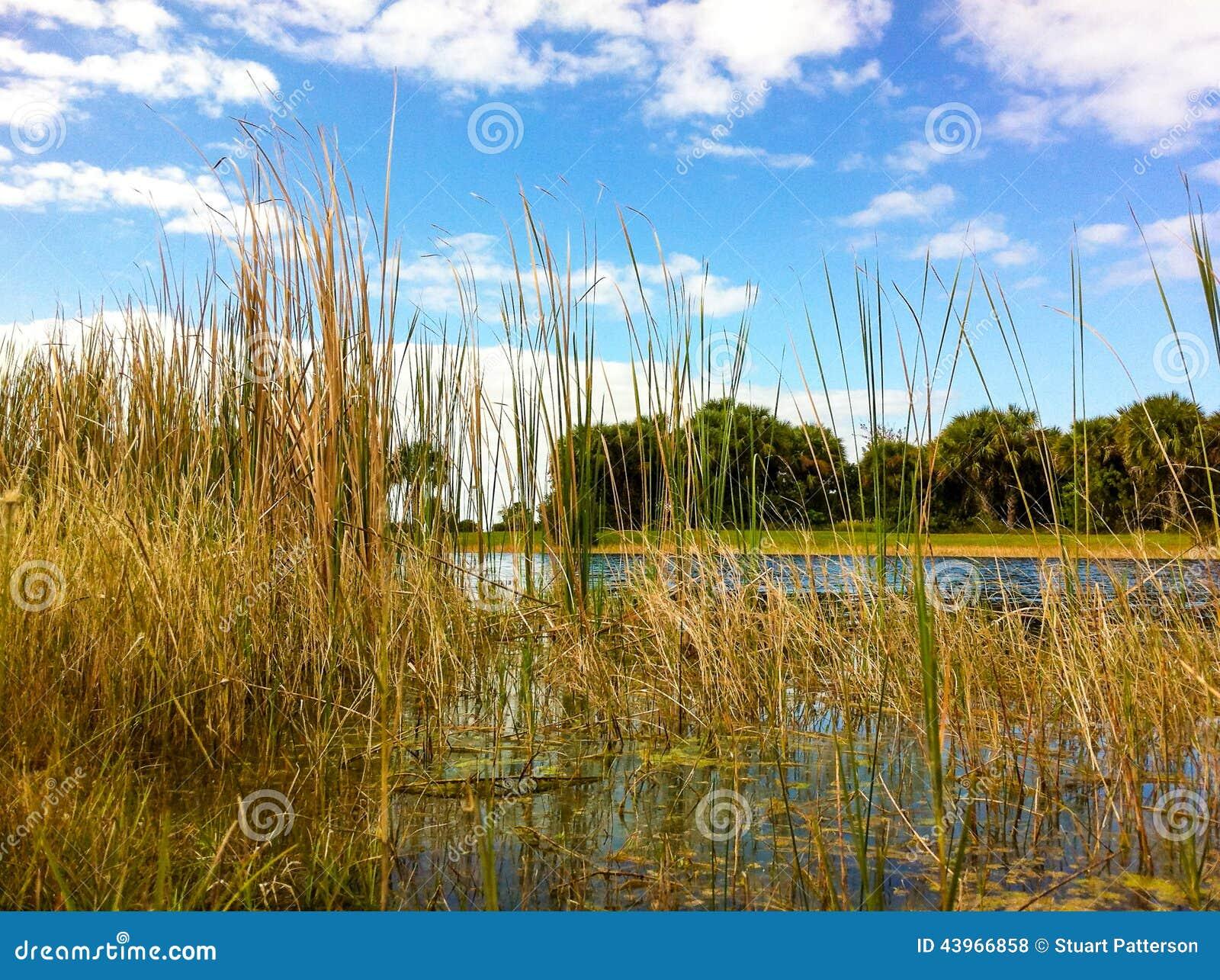blauer himmel teich und vegetation stockfoto bild 43966858. Black Bedroom Furniture Sets. Home Design Ideas