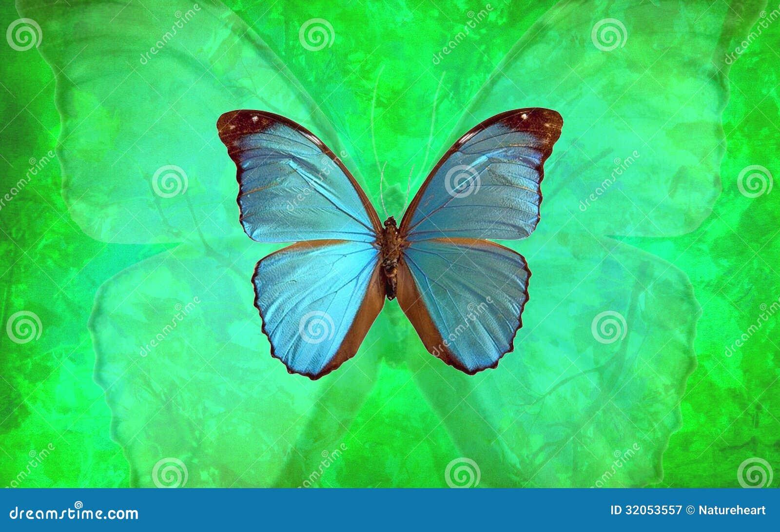 Blauer Morpho-Schmetterling mit vibrierendem grünem Hintergrund