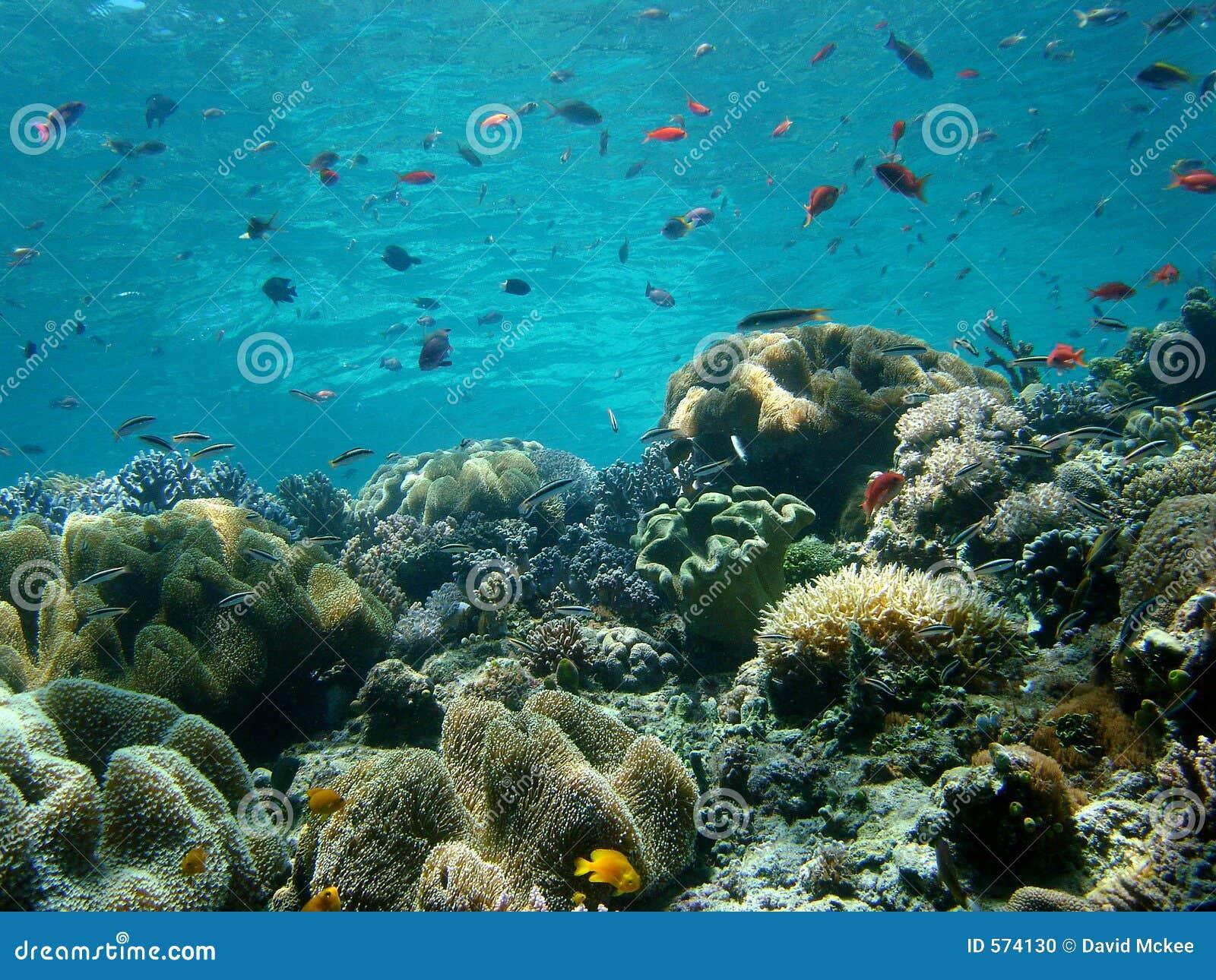 Blaues Wasser, Korallenriff
