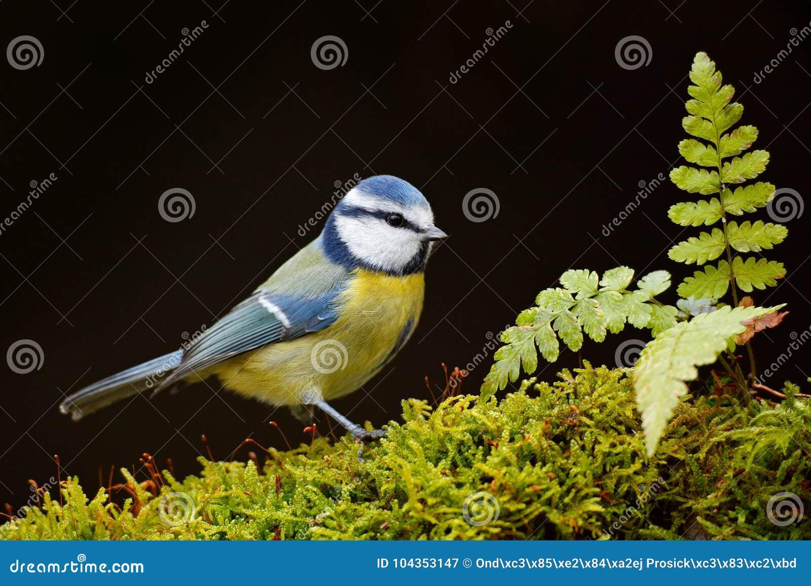 kleiner gelber vogel deutschland