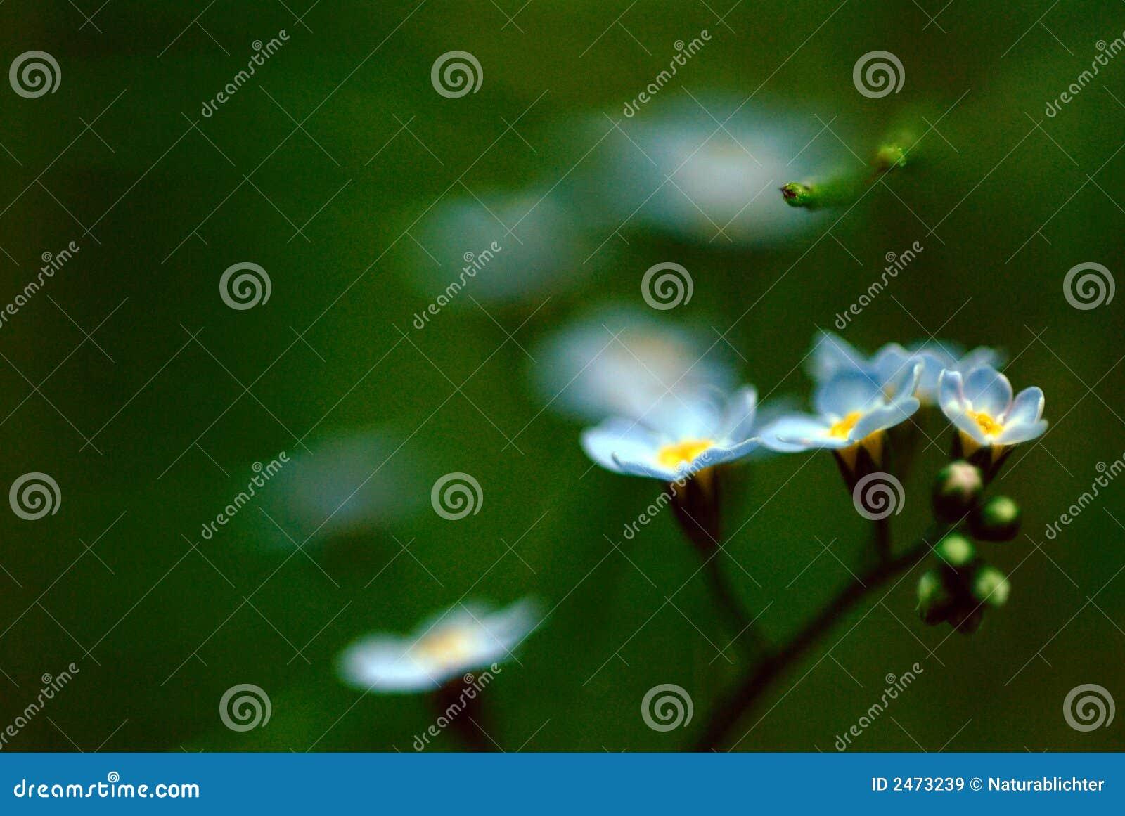 Blauw BloemenOnduidelijk beeld