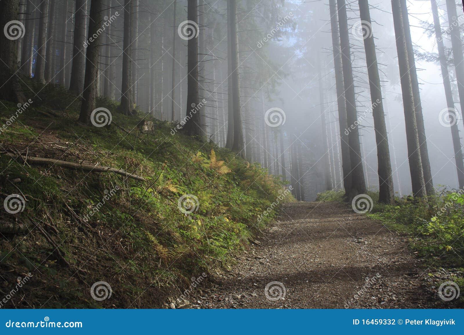 Blauw bos in de herfst