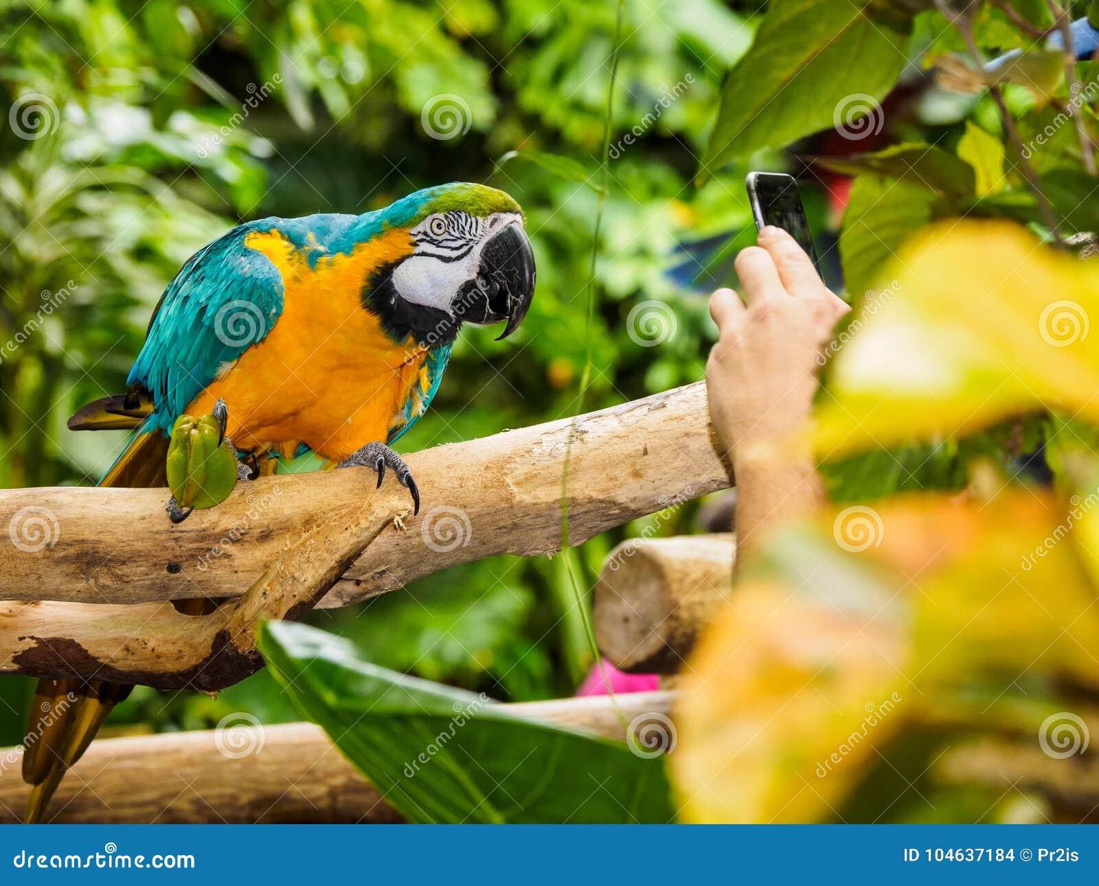 Download Blauw-en-gele Ara - Ararauna Van Aronskelken Stock Foto - Afbeelding bestaande uit posing, boom: 104637184