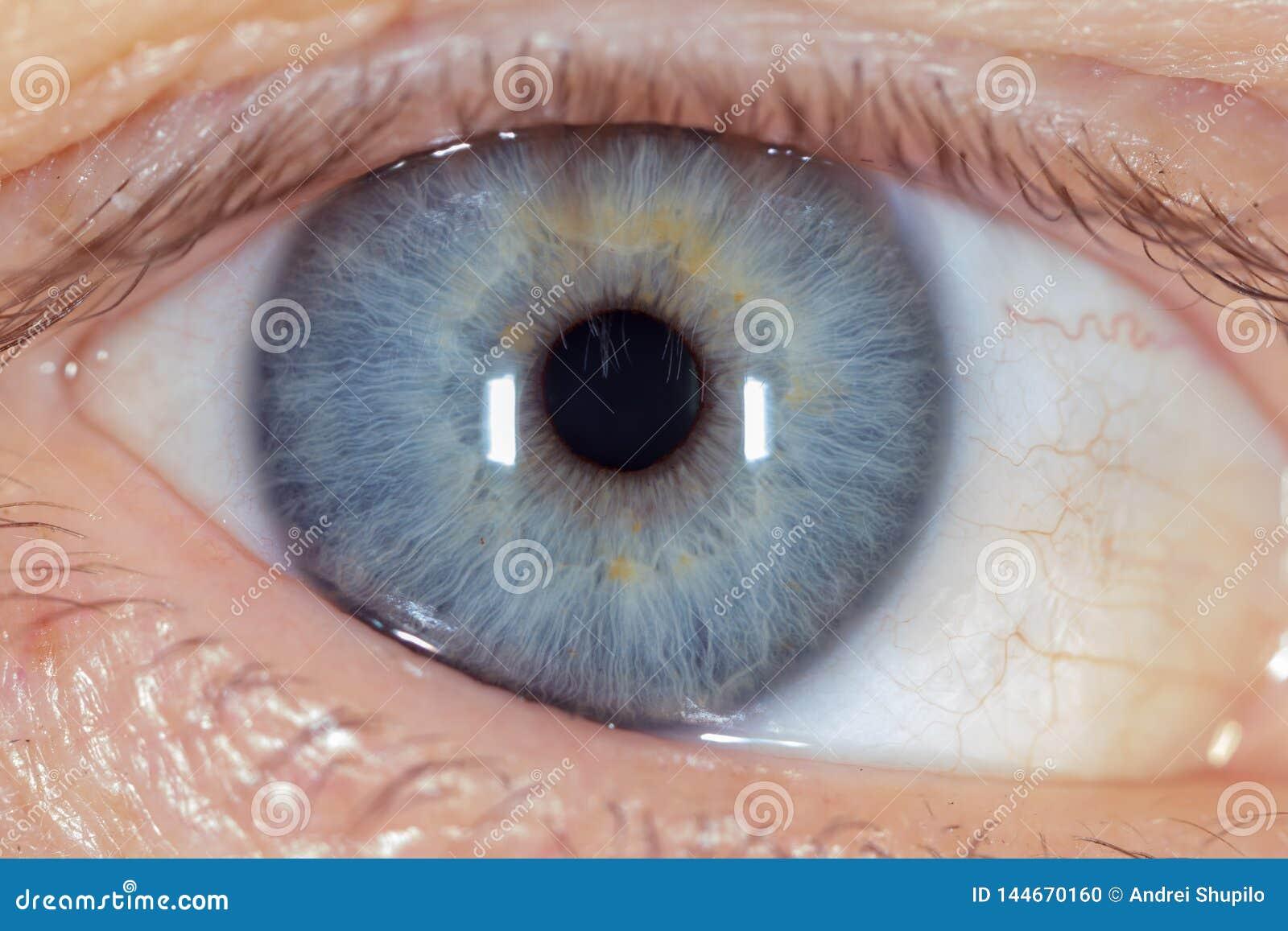 Blauw oog op het man gezicht Macro
