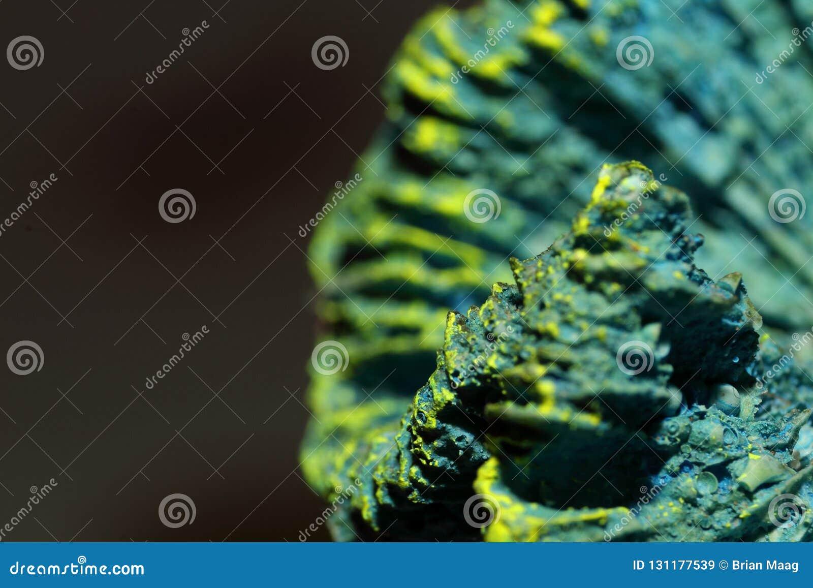 Blauw Skeletkoraal