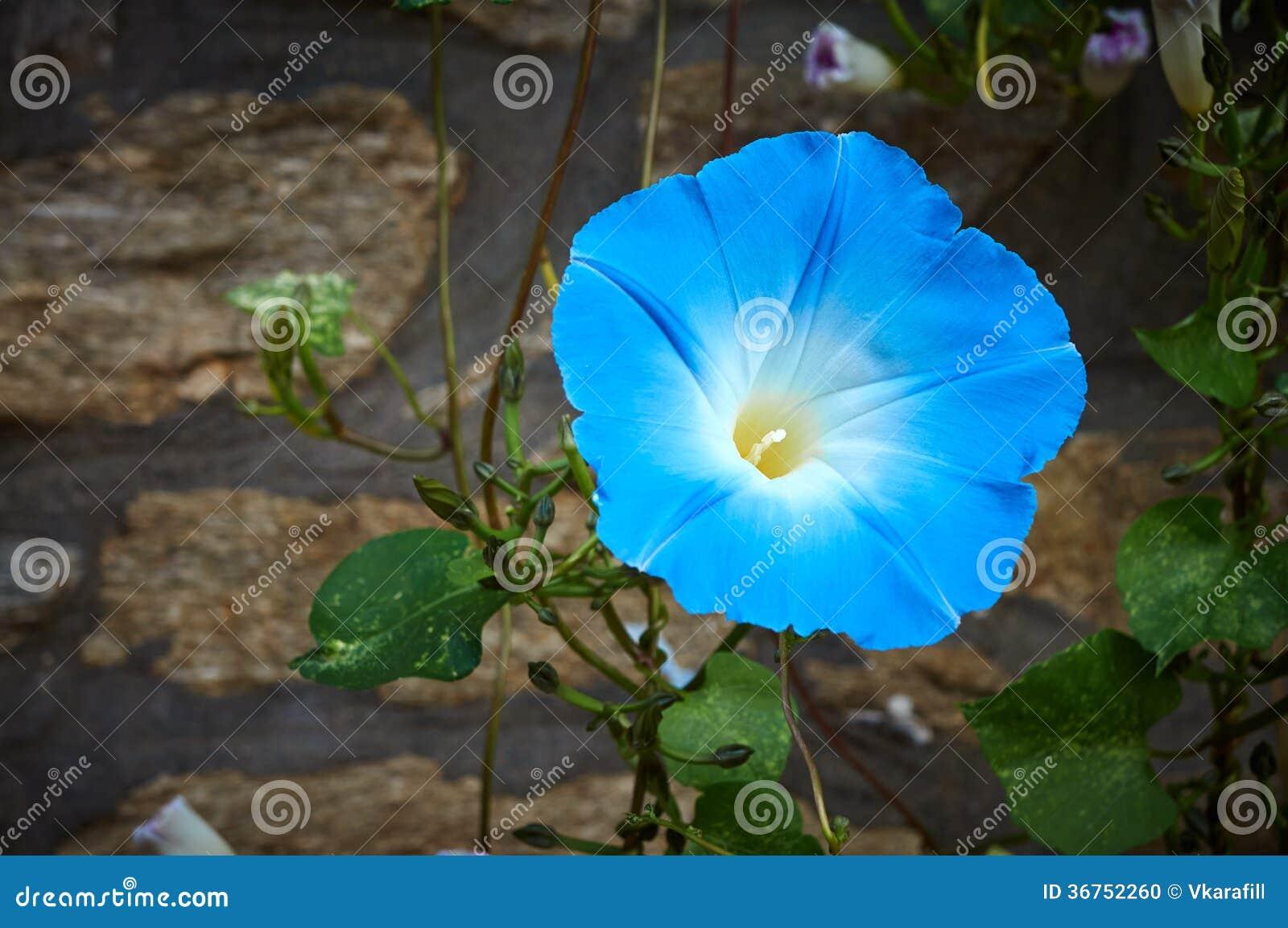Blauwe bloeibloem in aard