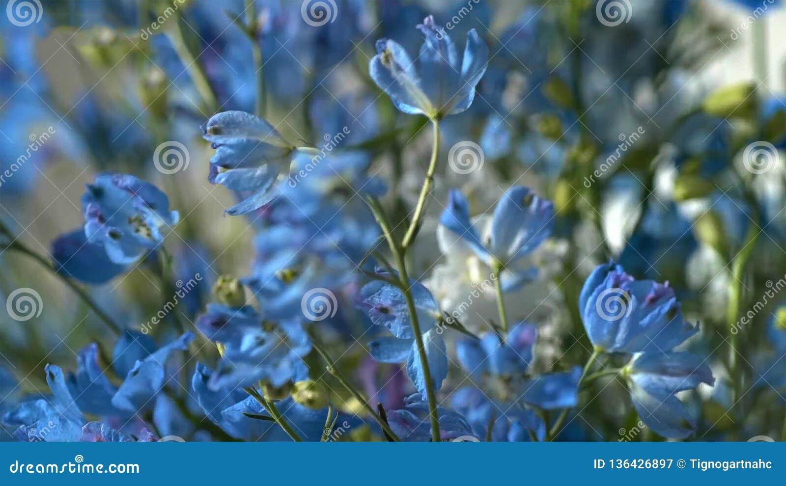Blauwe bloem - Beeld