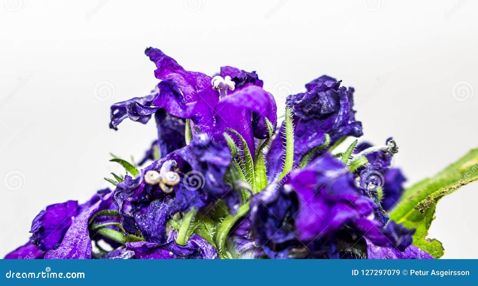 Blauwe bloem op wit geïsoleerde achtergrond