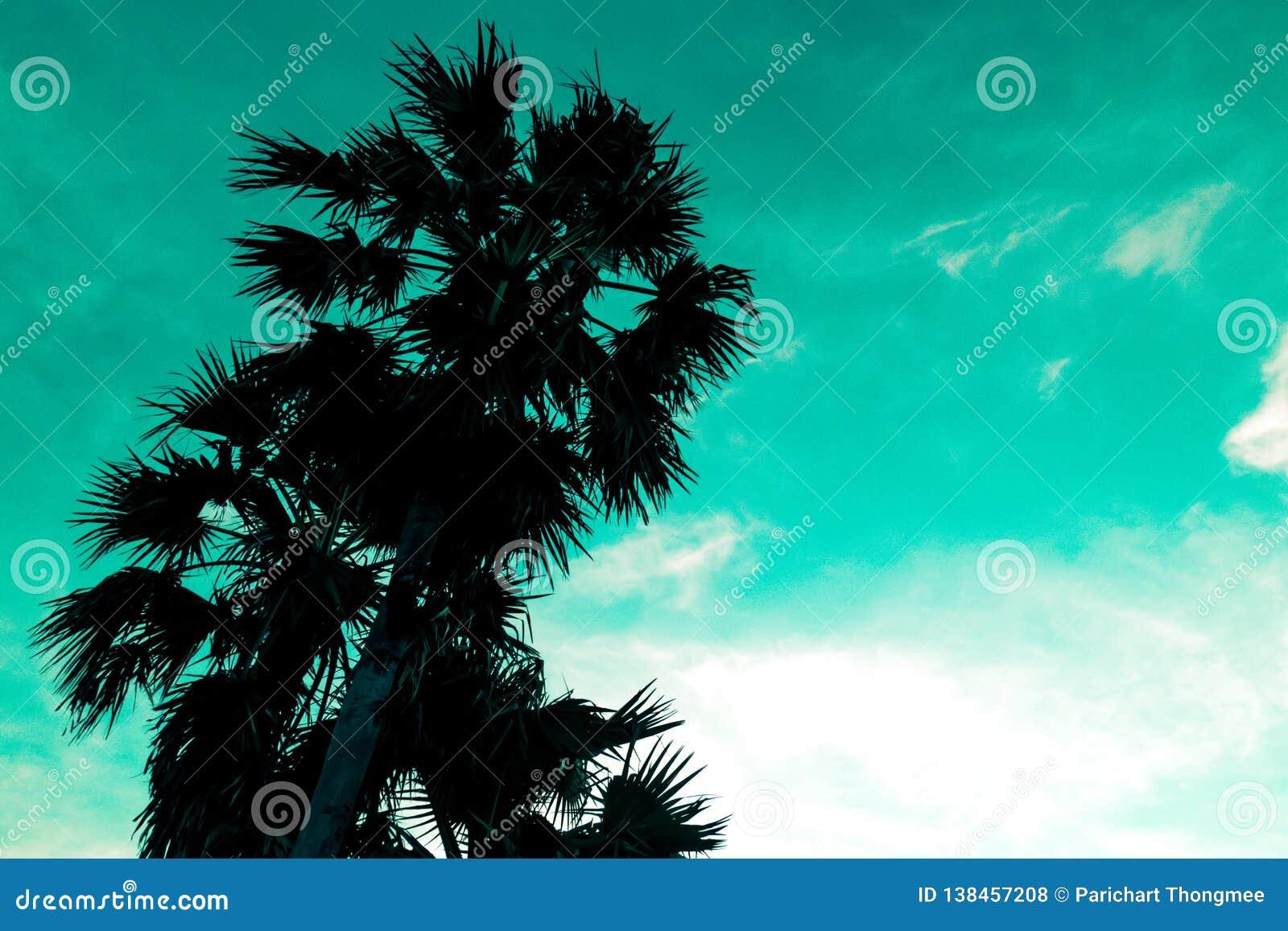 Blauwe hemel en palmenmening van onderaan, uitstekende stijl, de levendige achtergrond van de de zomerlente