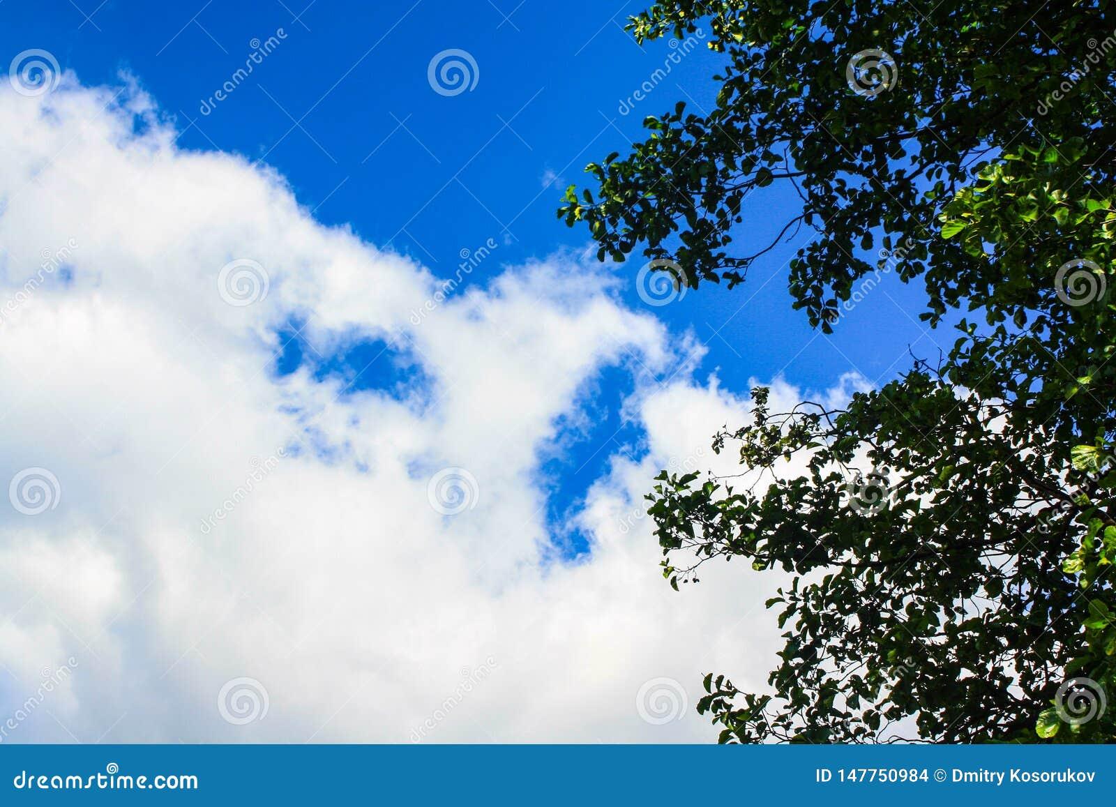 Blauwe hemel, witte wolken, groene bladeren