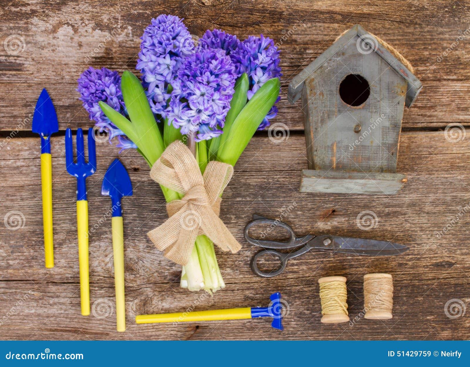 Blauwe hyacint en het tuinieren opstelling