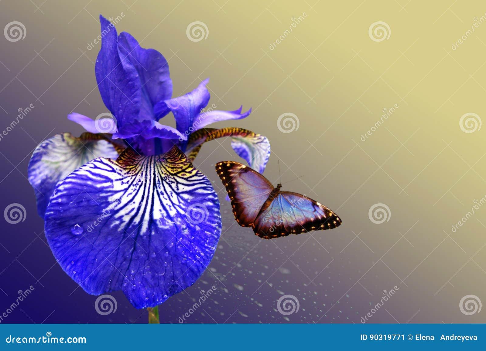Blauwe iris en vlinder