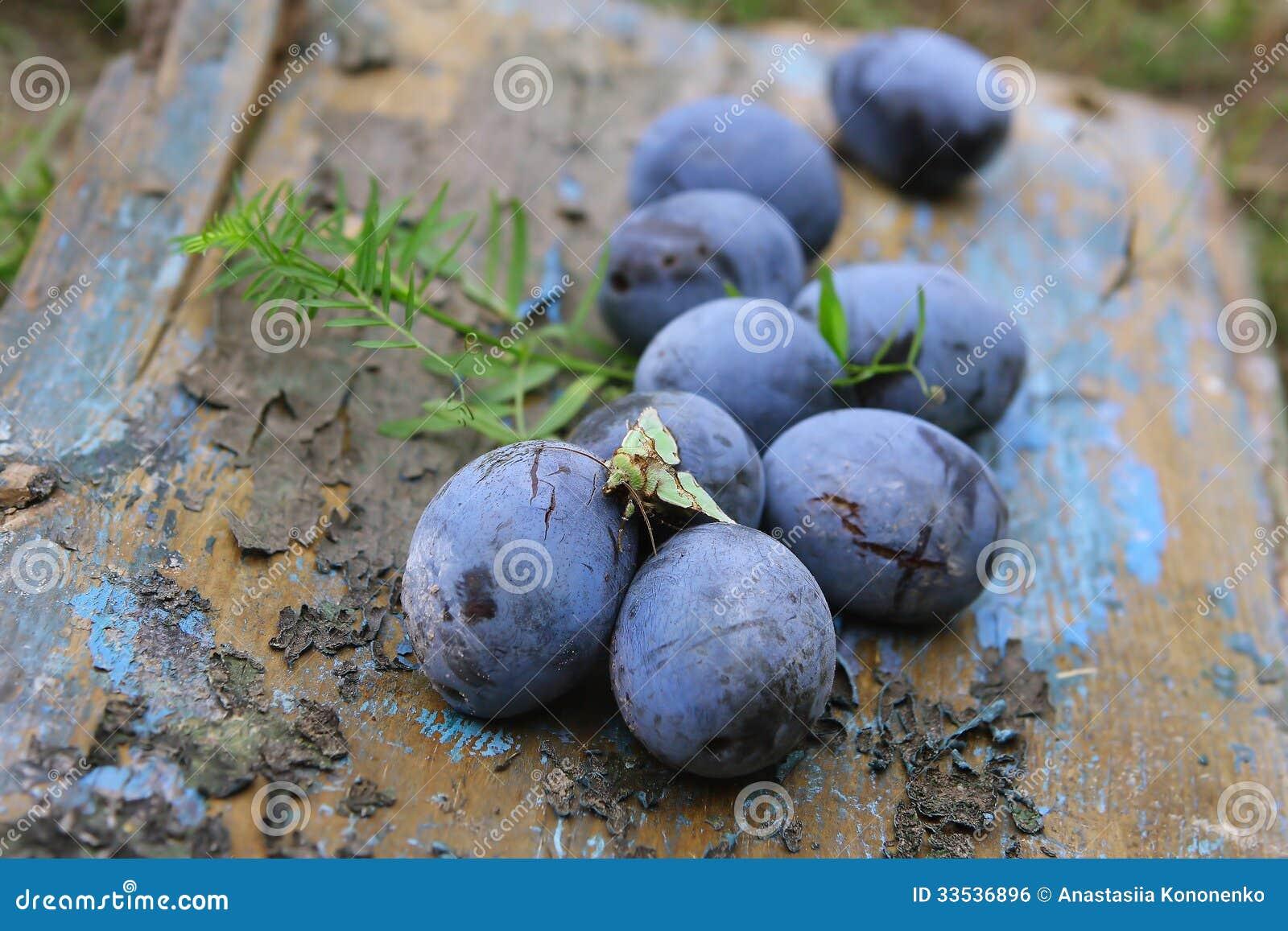 Blauwe pruim in de oude tuin stock foto afbeelding 33536896 - Tuin decoratie buitenkant ...