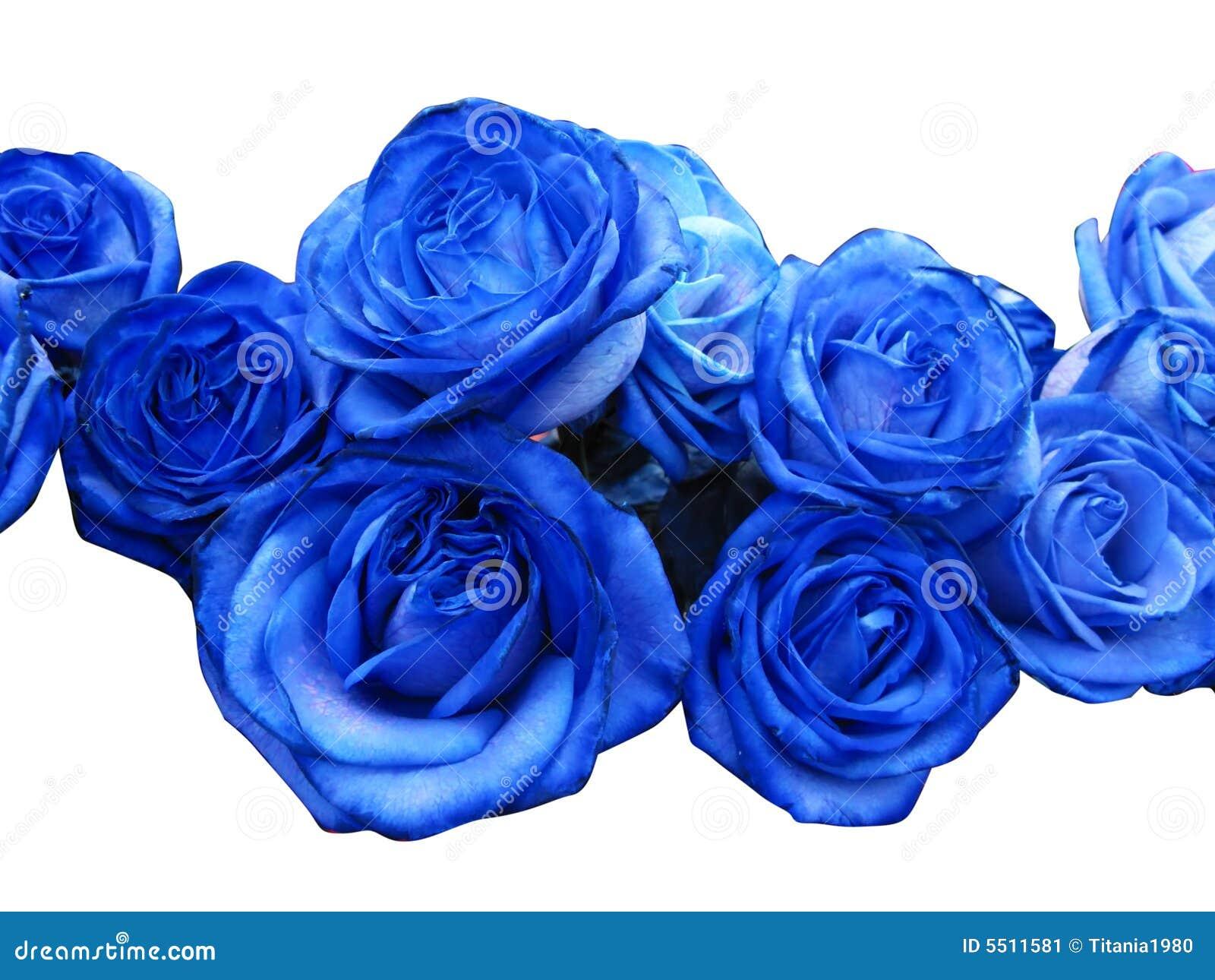 Blauwe rozen stock afbeelding afbeelding 5511581 - Blauwe turquoise decoratie ...