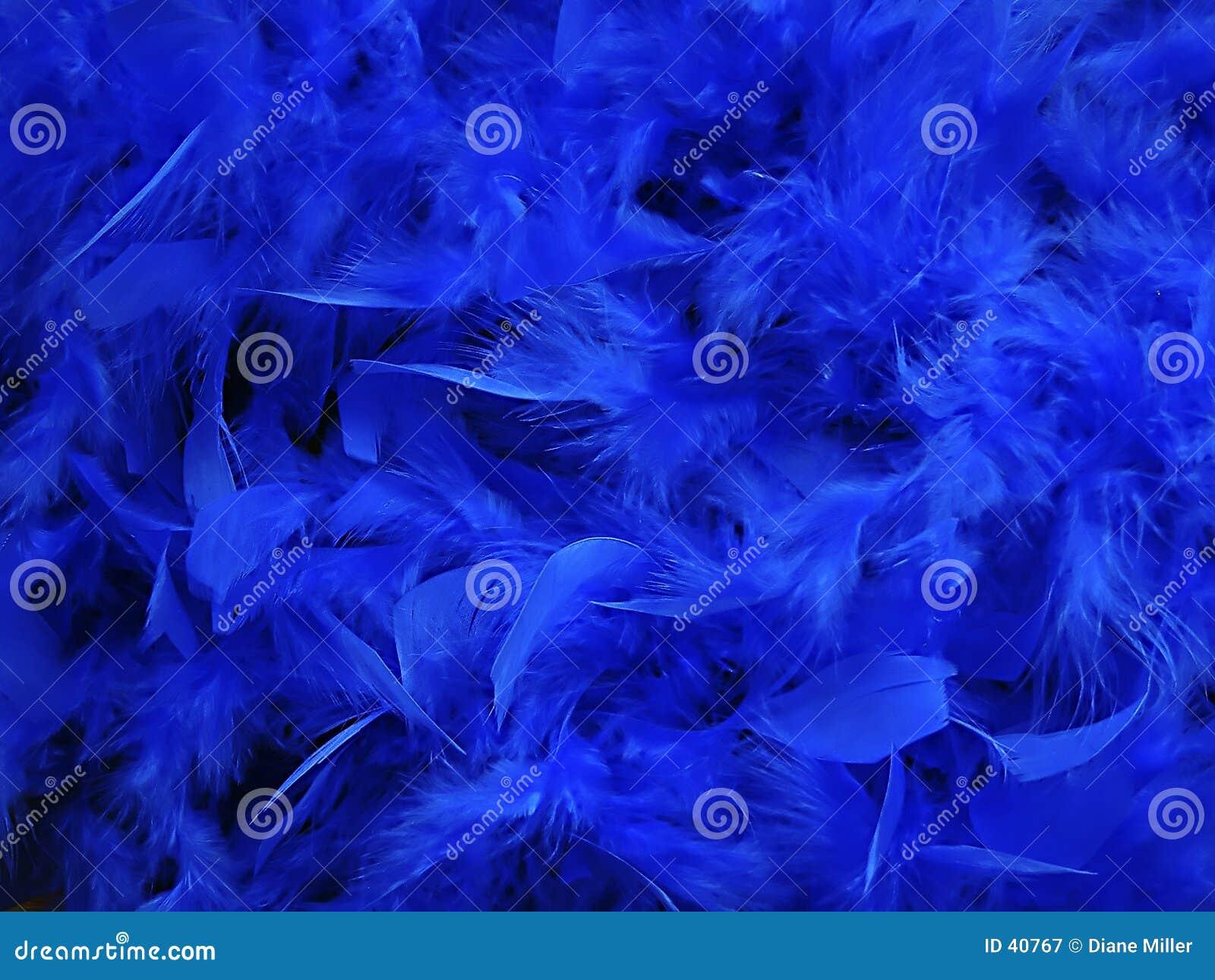 Blauwe veren