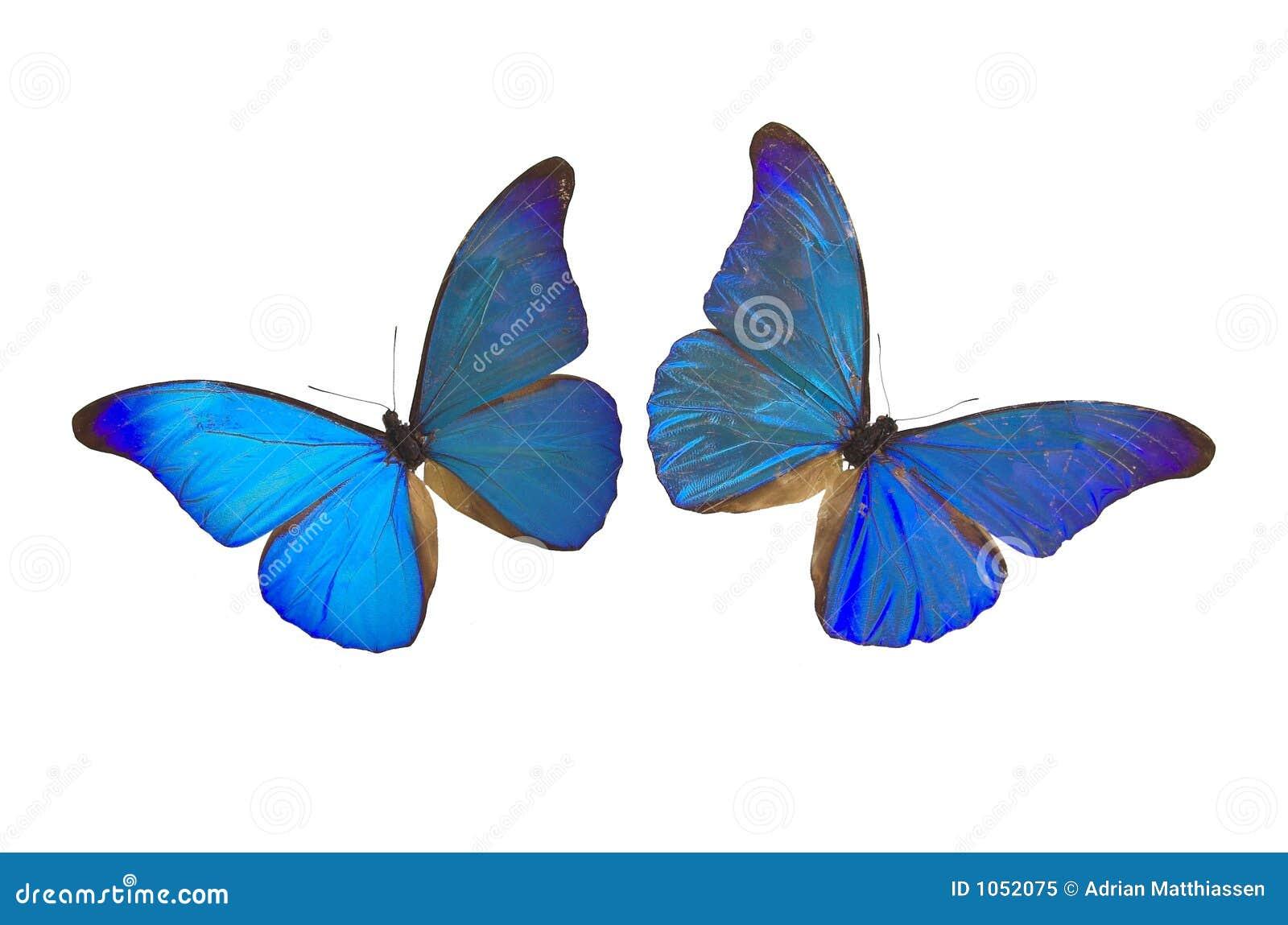 21 mooie kleurrijke vlinder - photo #8