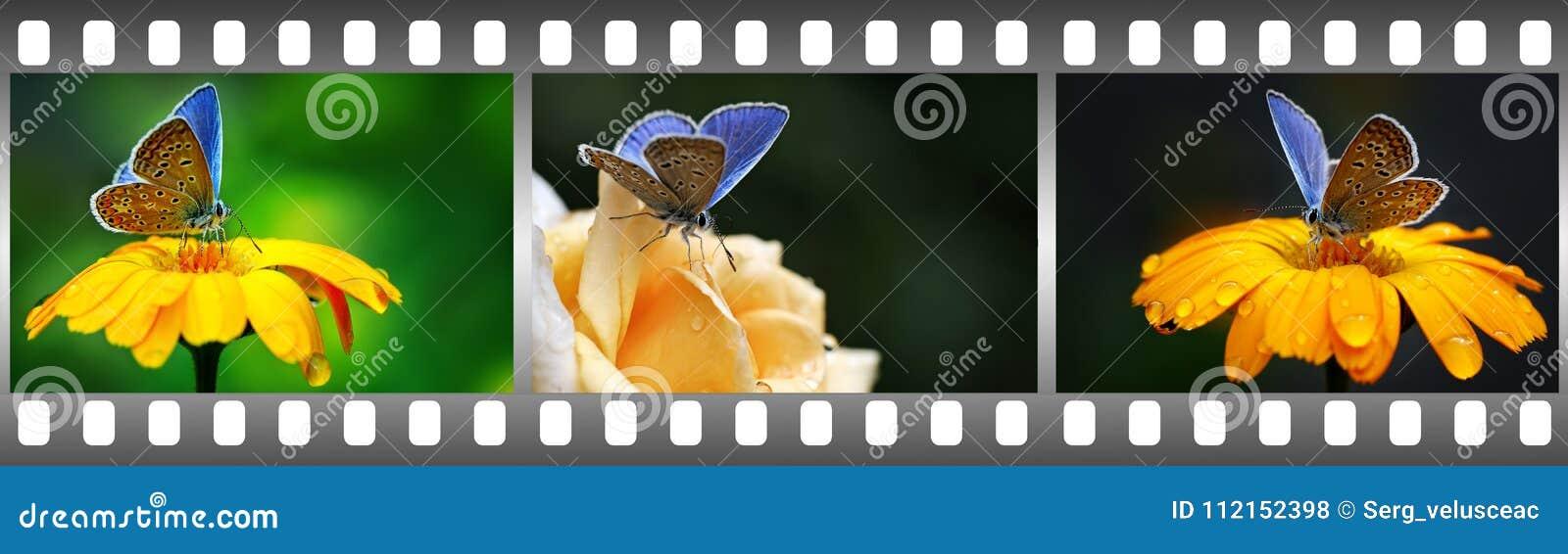 Blauwe vlinders op bloemen in kader in vormfilm