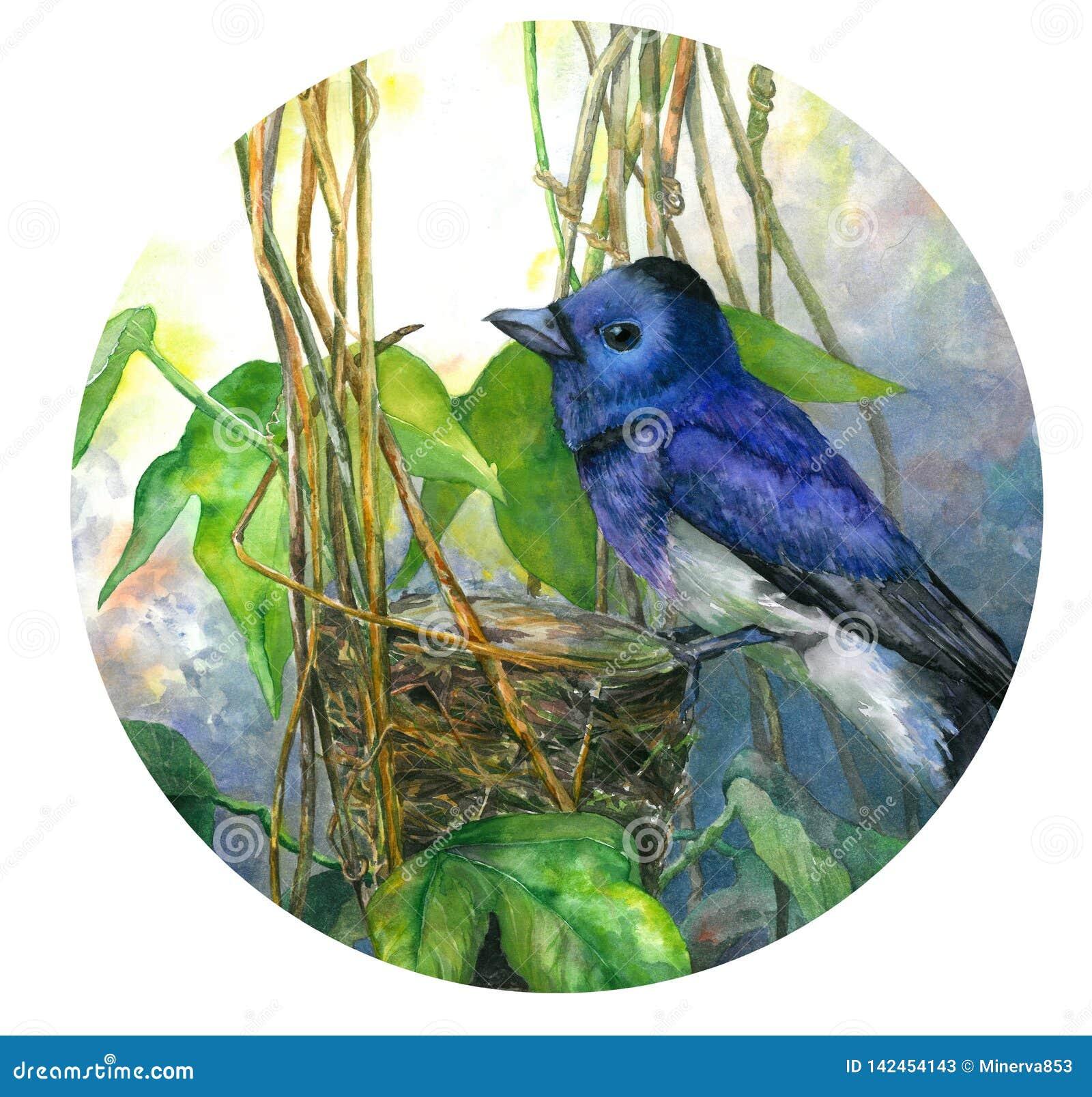 Blauwe vogel op nest in bladeren Waterverfillustratie in cirkel