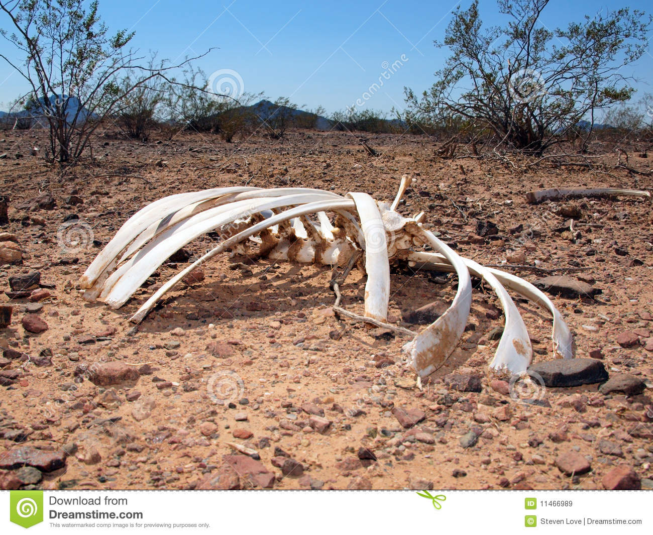 The Sun Bleached Bones Of An Animal That Died In Unforgiving