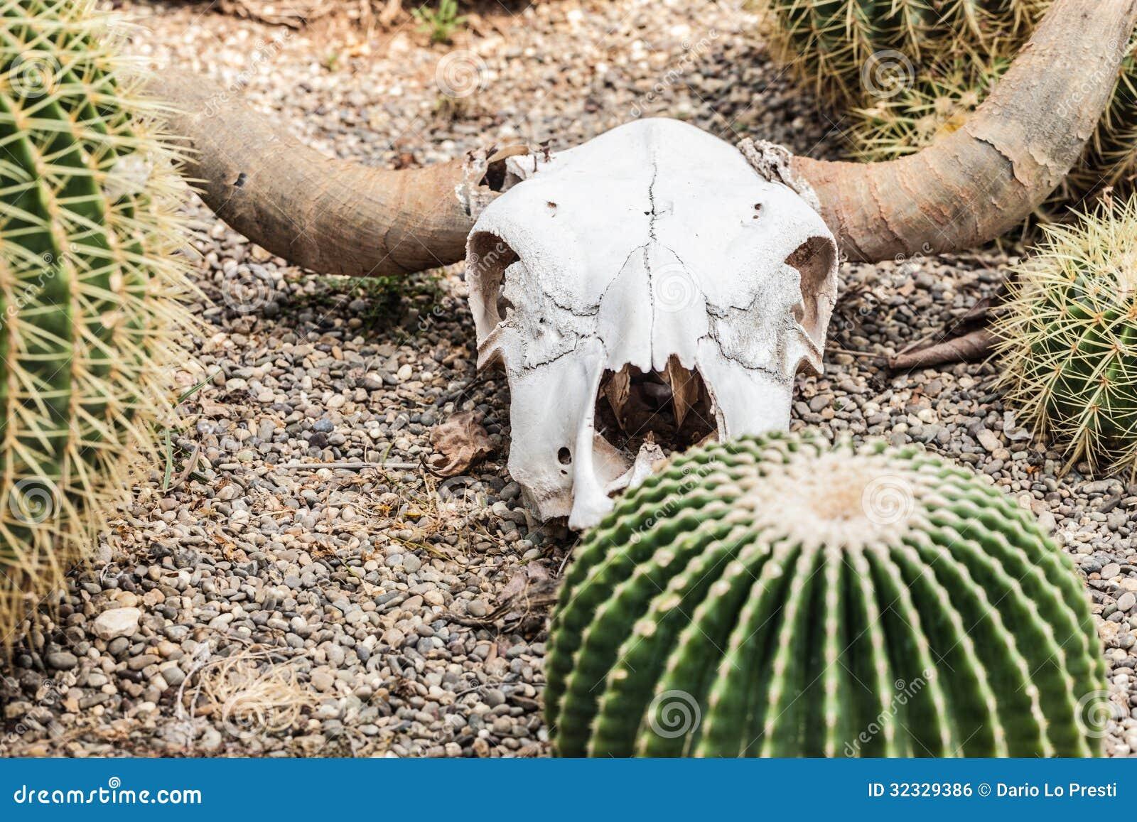 cow skull and desert - photo #34